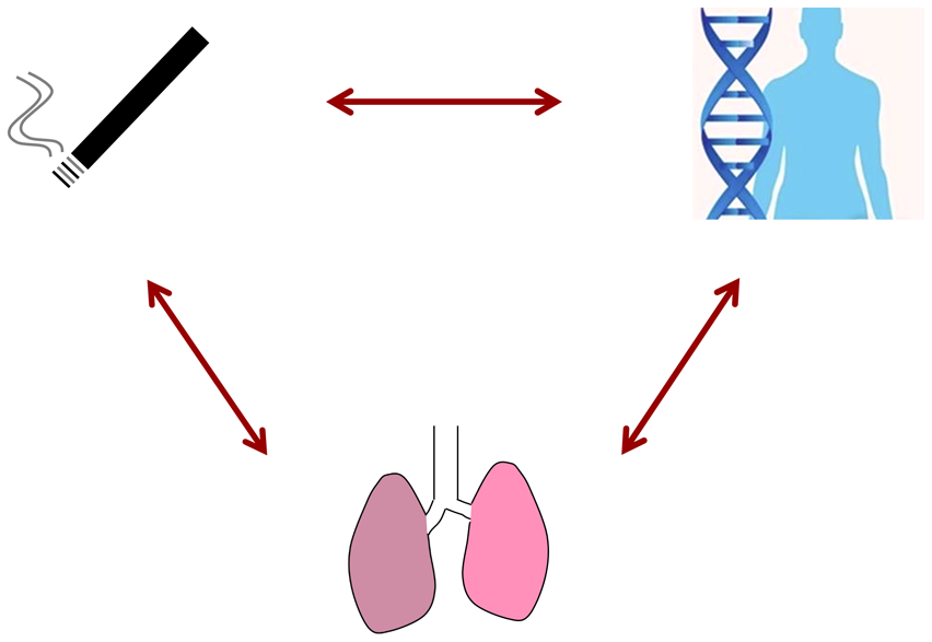 In this issue of <i>PLOS Genetics</i>, Hancock et al. address gene–environment interaction effects based on smoking status, GWAS data, and lung function outcomes in over 50,000 adults.