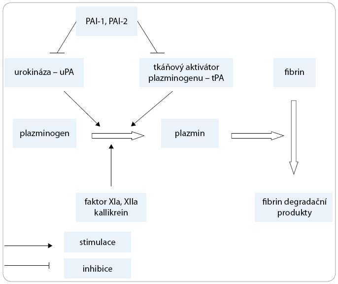 Zjednodušené schéma fibrinolýzy.