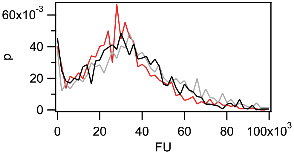 The amount of imported Cy3-DNA after 1 h is independent of fragment length.