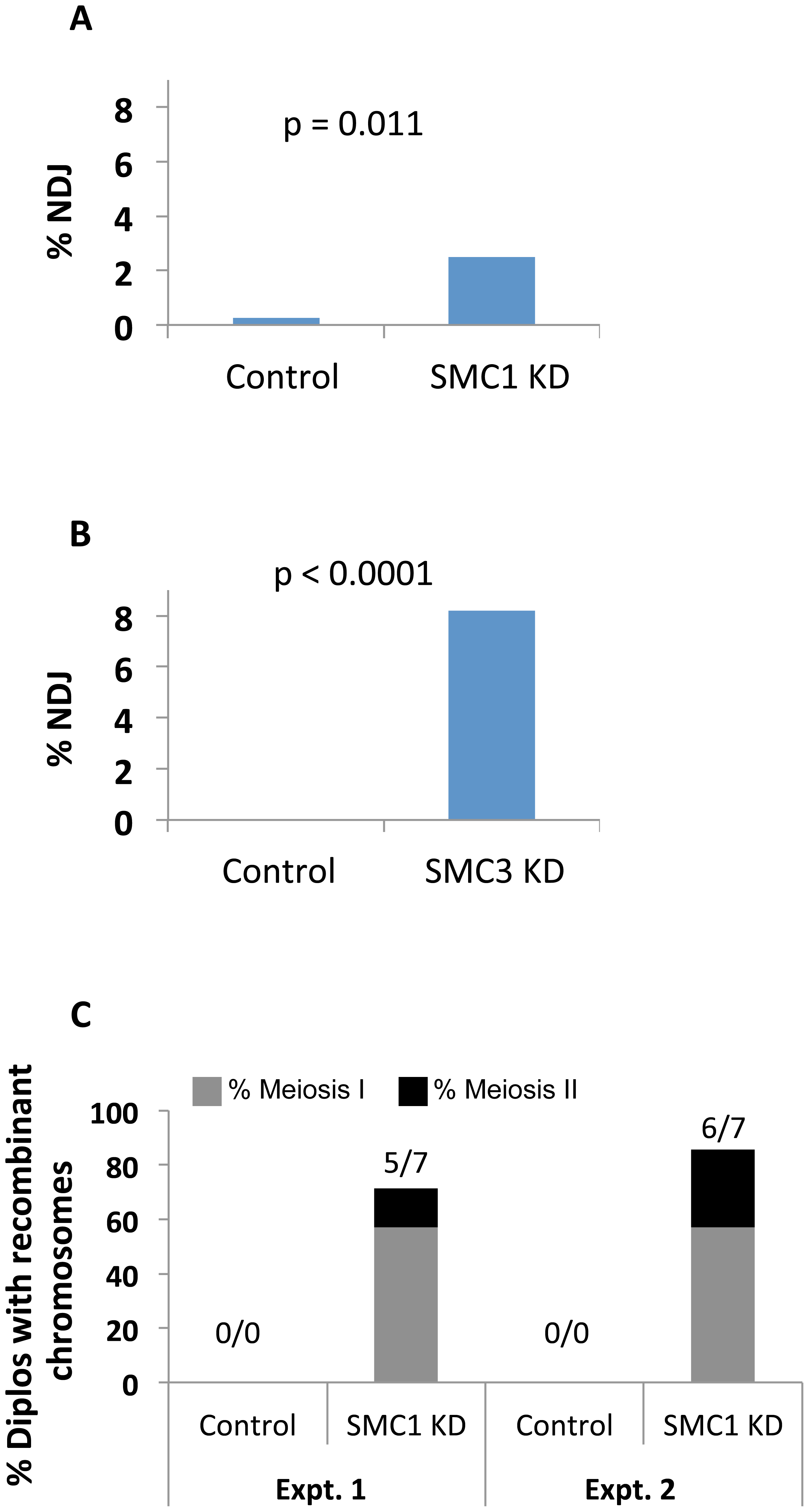 Cohesin subunit knockdown after meiotic S phase causes loss of chiasmata and chromosome segregation defects.