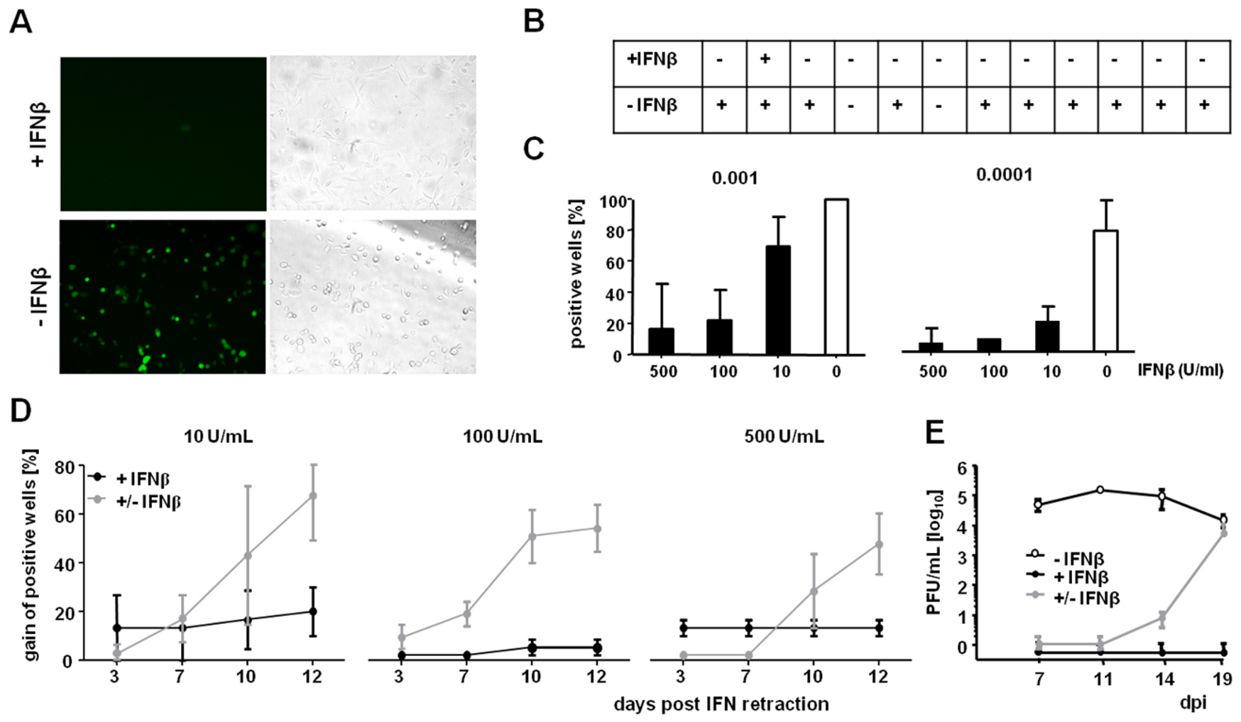 Inhibition of viral replication by IFNβ is reversible and occurs prior to immediate-early gene expression.