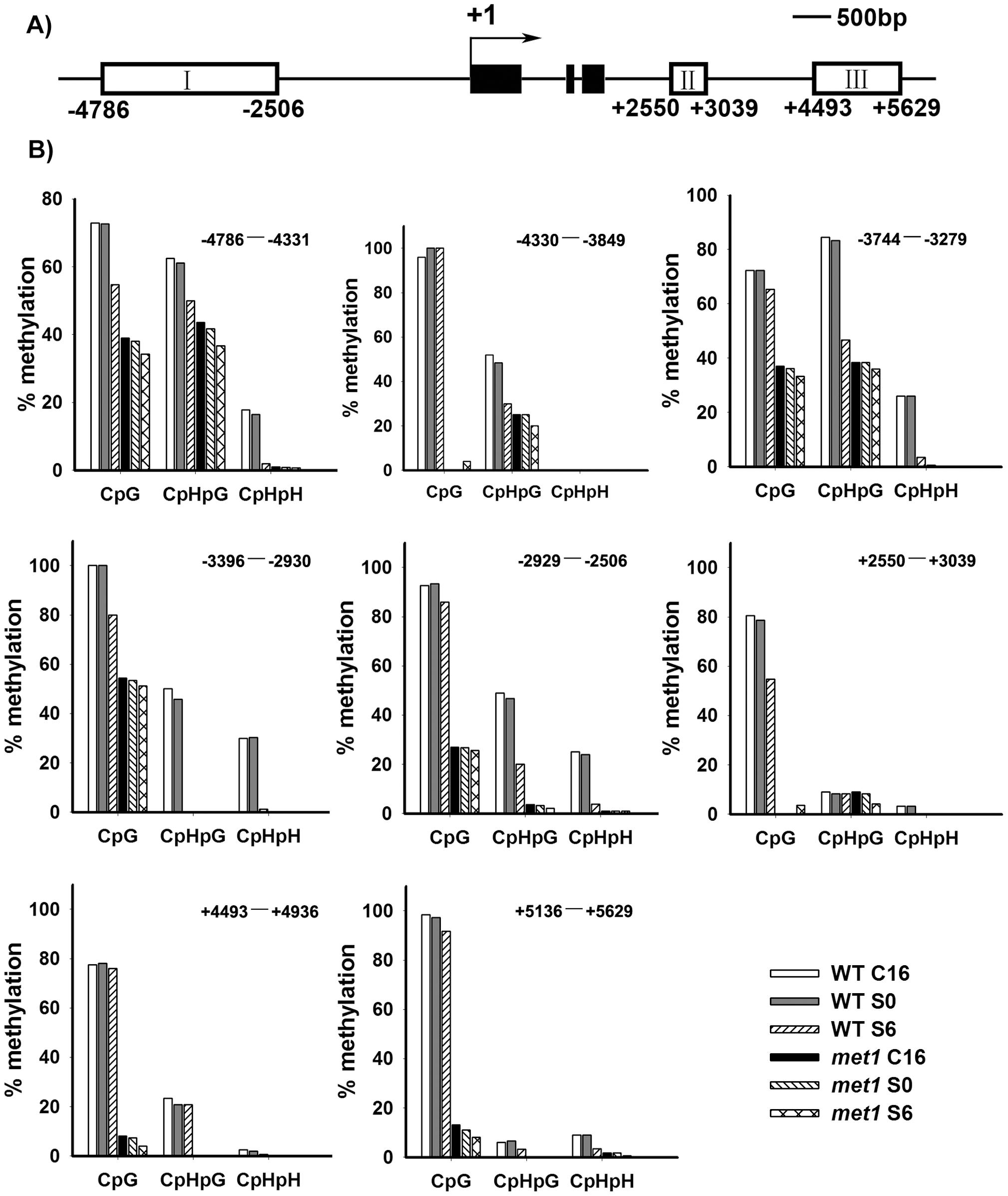 Analysis of <i>WUS</i> methylation through bisulfite genomic sequencing.
