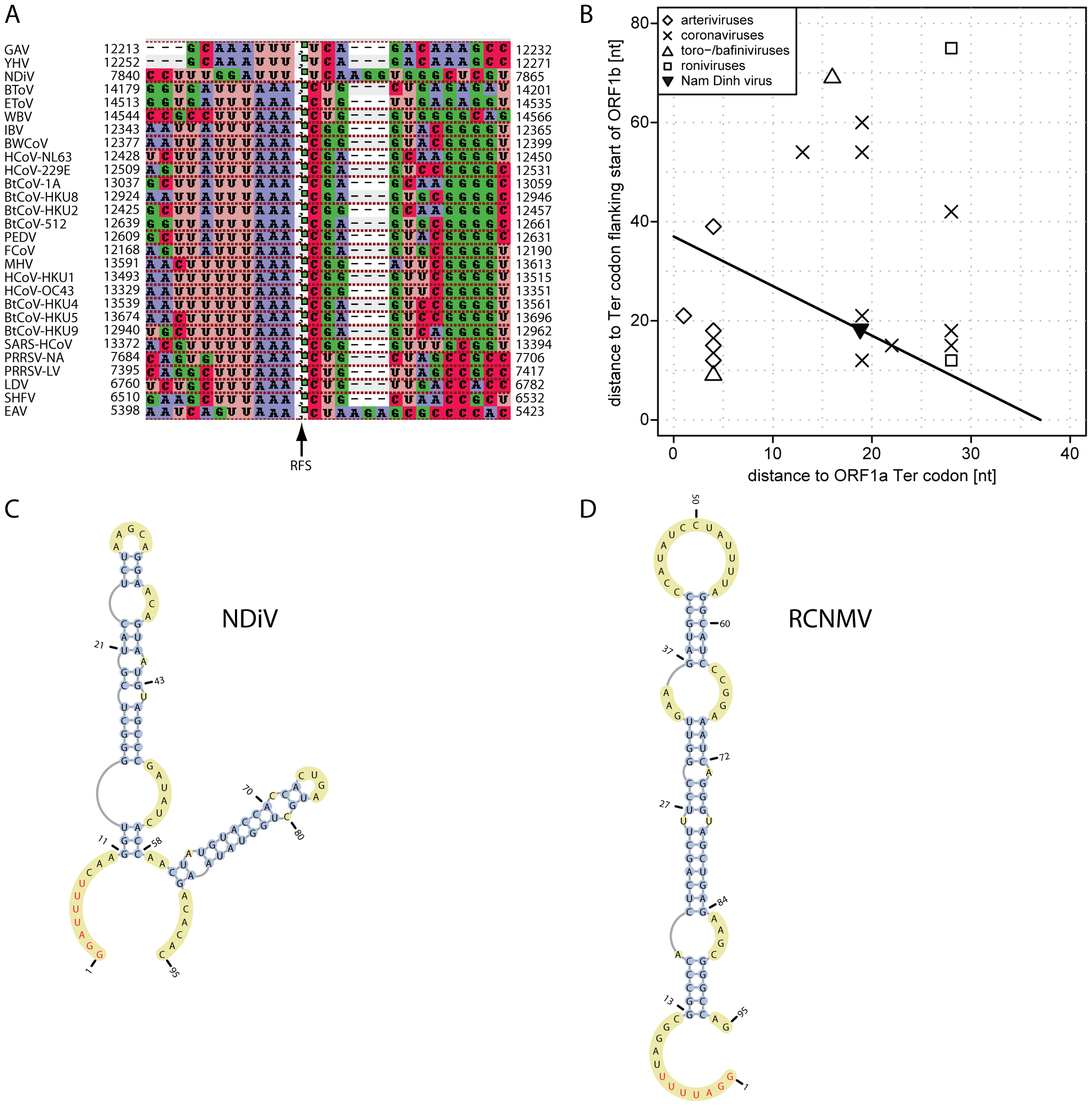 ORF1a/ORF1b ribosomal frameshifting in the NDiV genome.