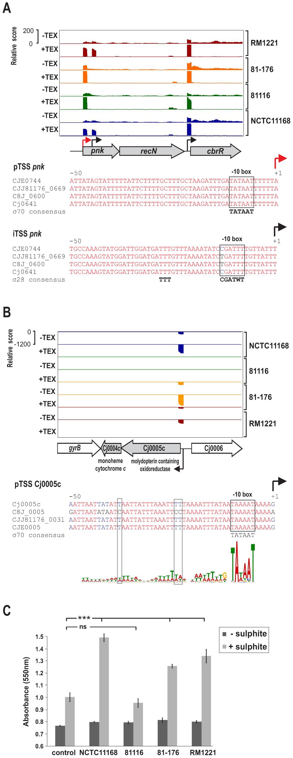 SNP–dependent promoter usage in <i>C. jejuni</i>.