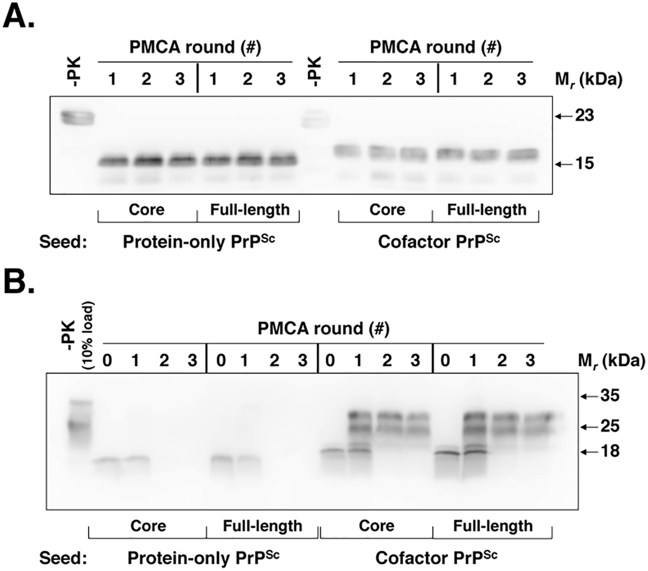 Cofactor and protein-only PrP<sup>Sc</sup> are stably propagating recombinant PrP conformers that differ in their ability to template the conversion of native PrP<sup>C</sup>.