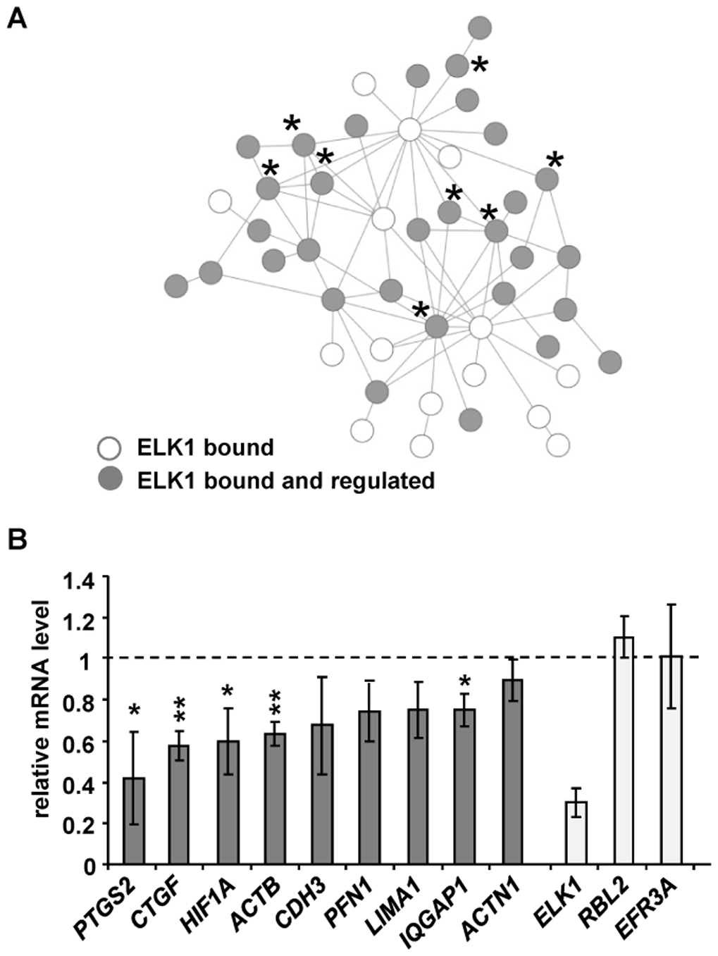 ELK1 controls a network of actin/migration-related genes.