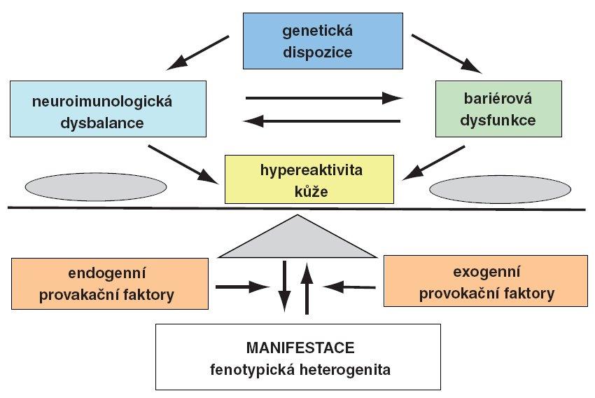 Etiopatogeneze atopické dermatitidy.