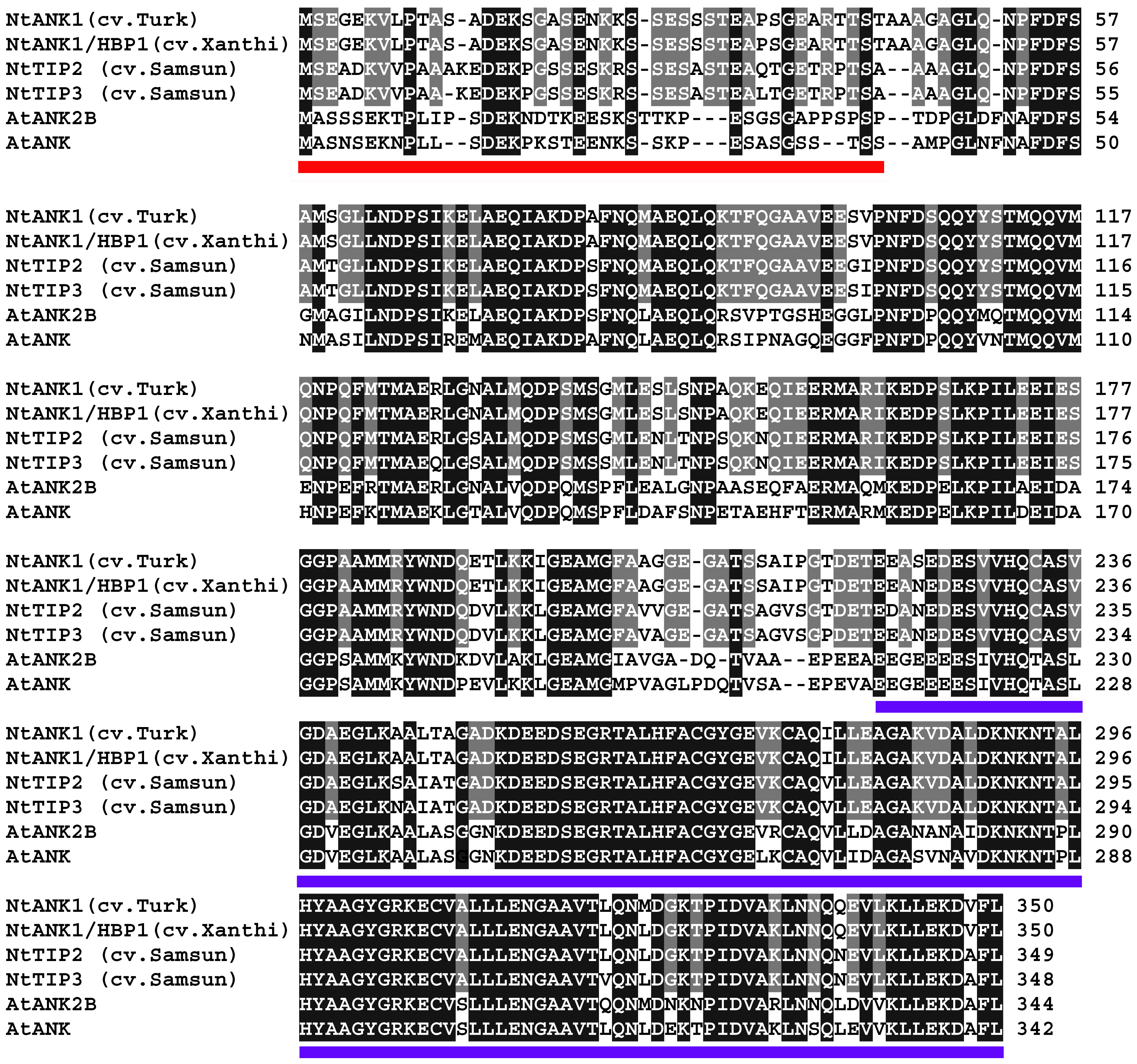 Amino acid sequence alignment of ANK proteins from different tobacco cultivars and Arabidopsis.