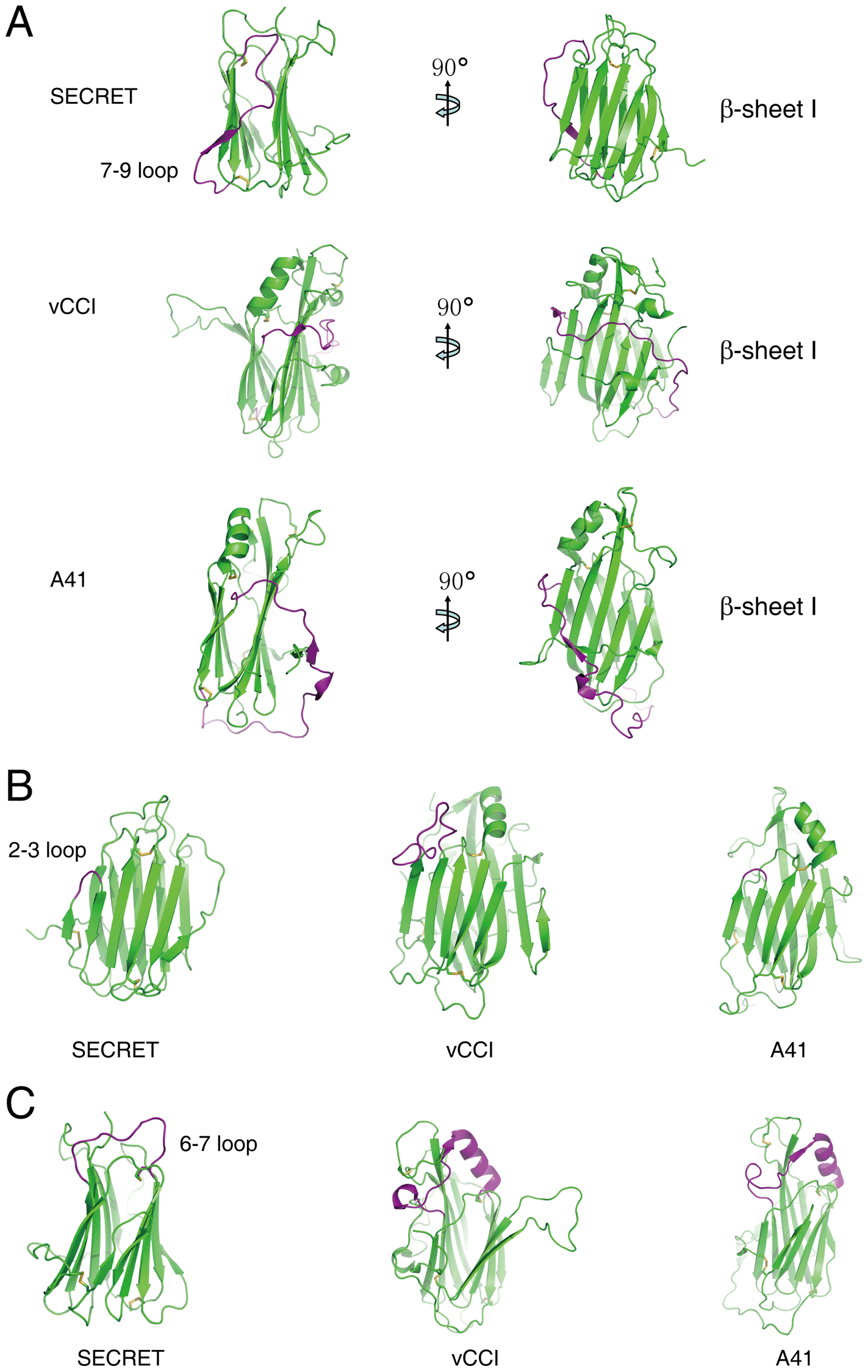 Structural comparison of the SECRET domain with vCCI and A41.