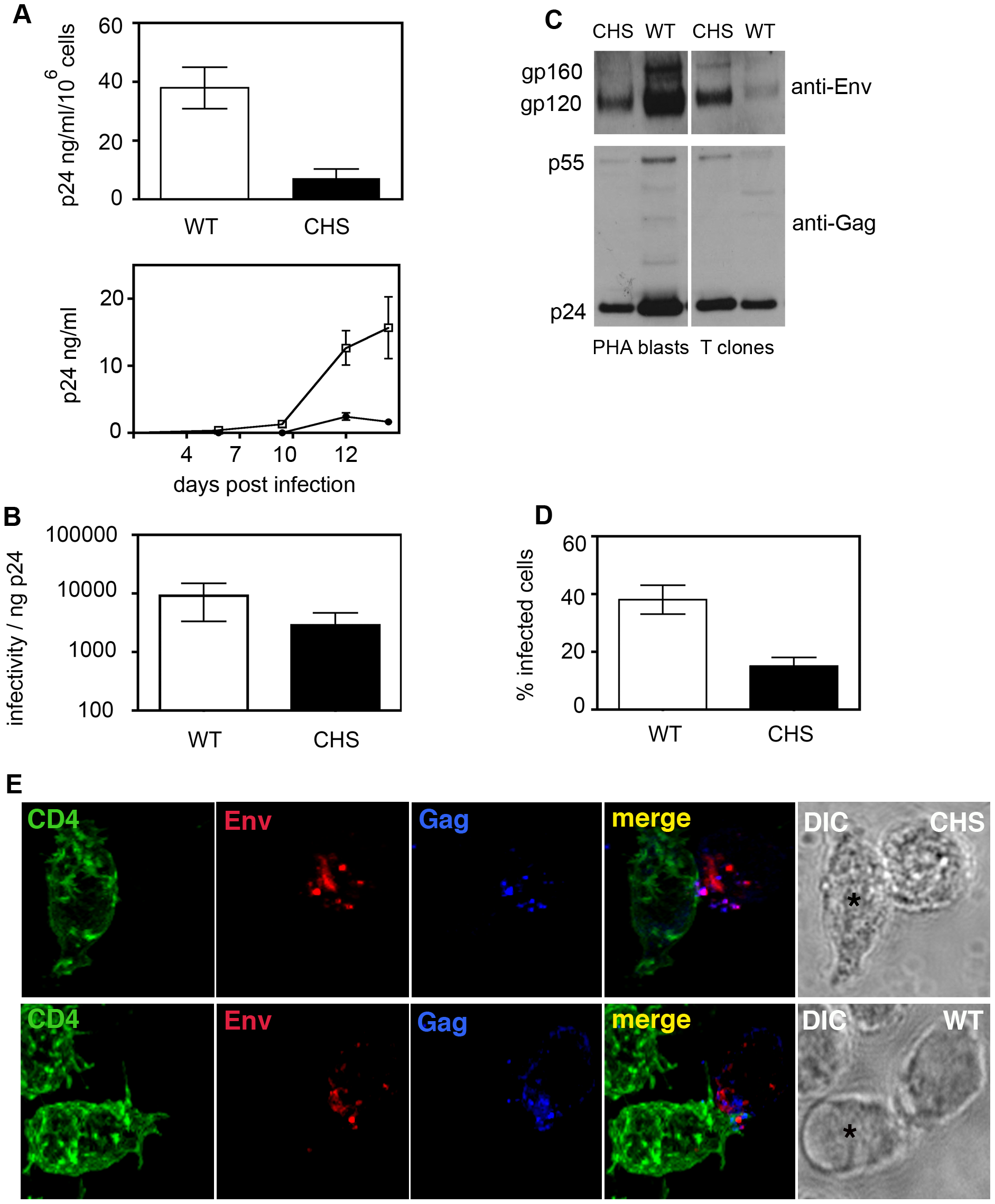 CHS CD4<sup>+</sup> T cells are less able to support HIV-1 replication in culture.