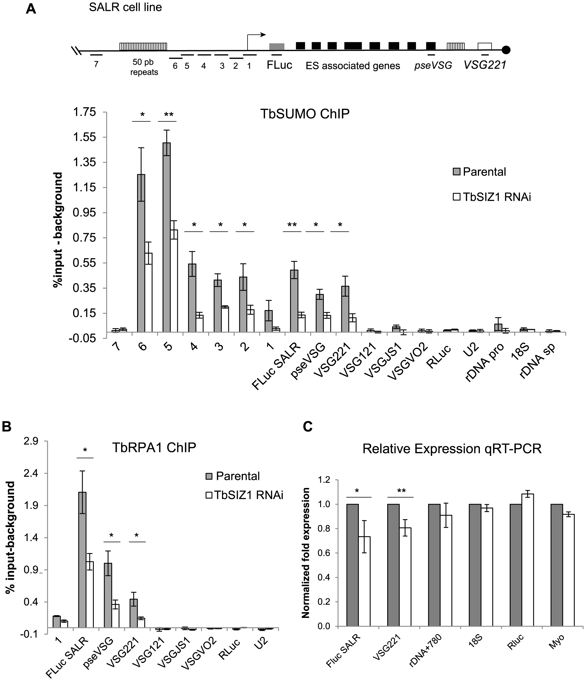 SUMOylation of chromatin-associated proteins by TbSIZ1 is important for efficient recruitment of RNA pol I and <i>VSG</i>-ES expression.