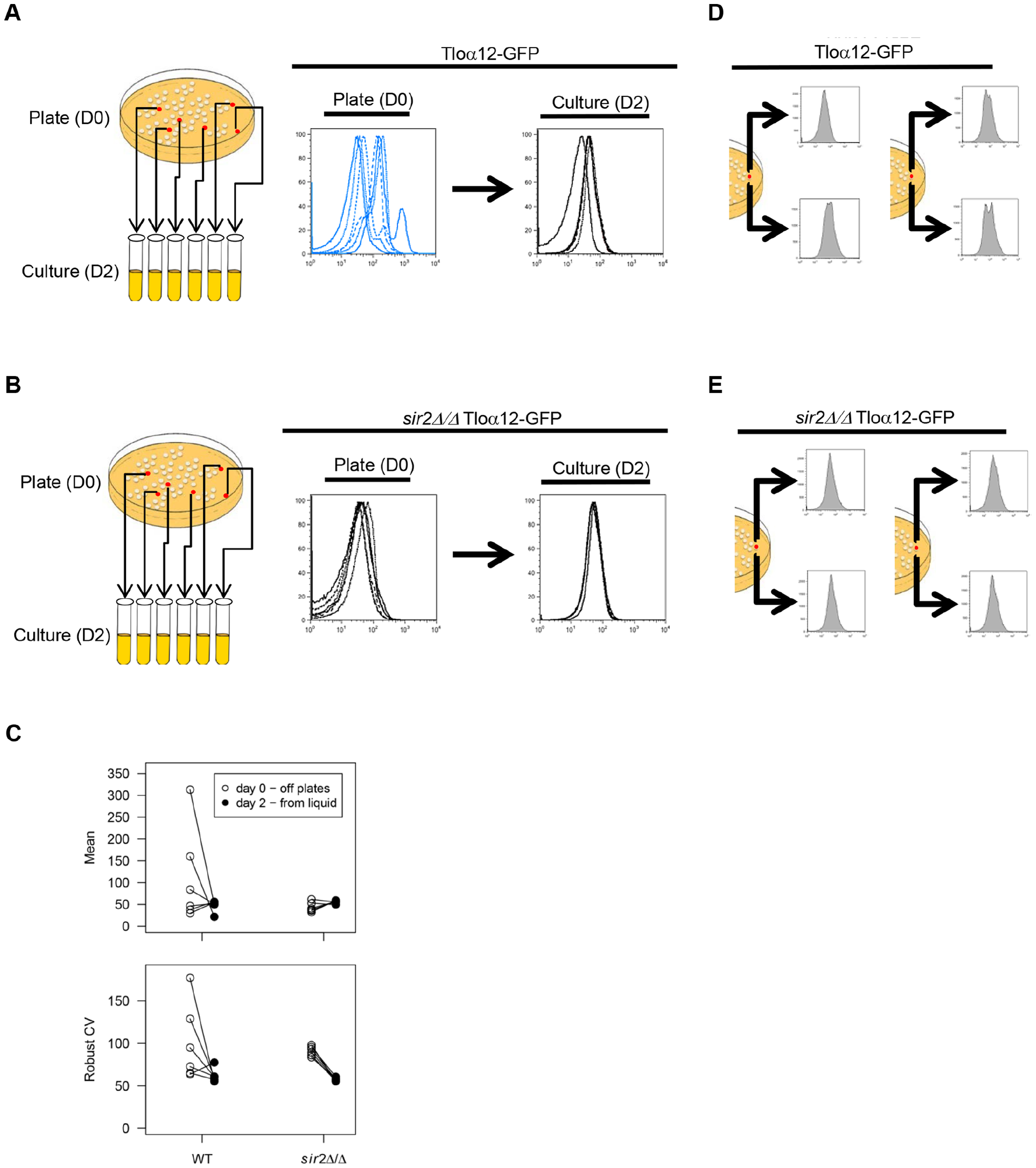 <i>TLO</i> noise and expression plasticity is greater in colonies than in liquid culture.