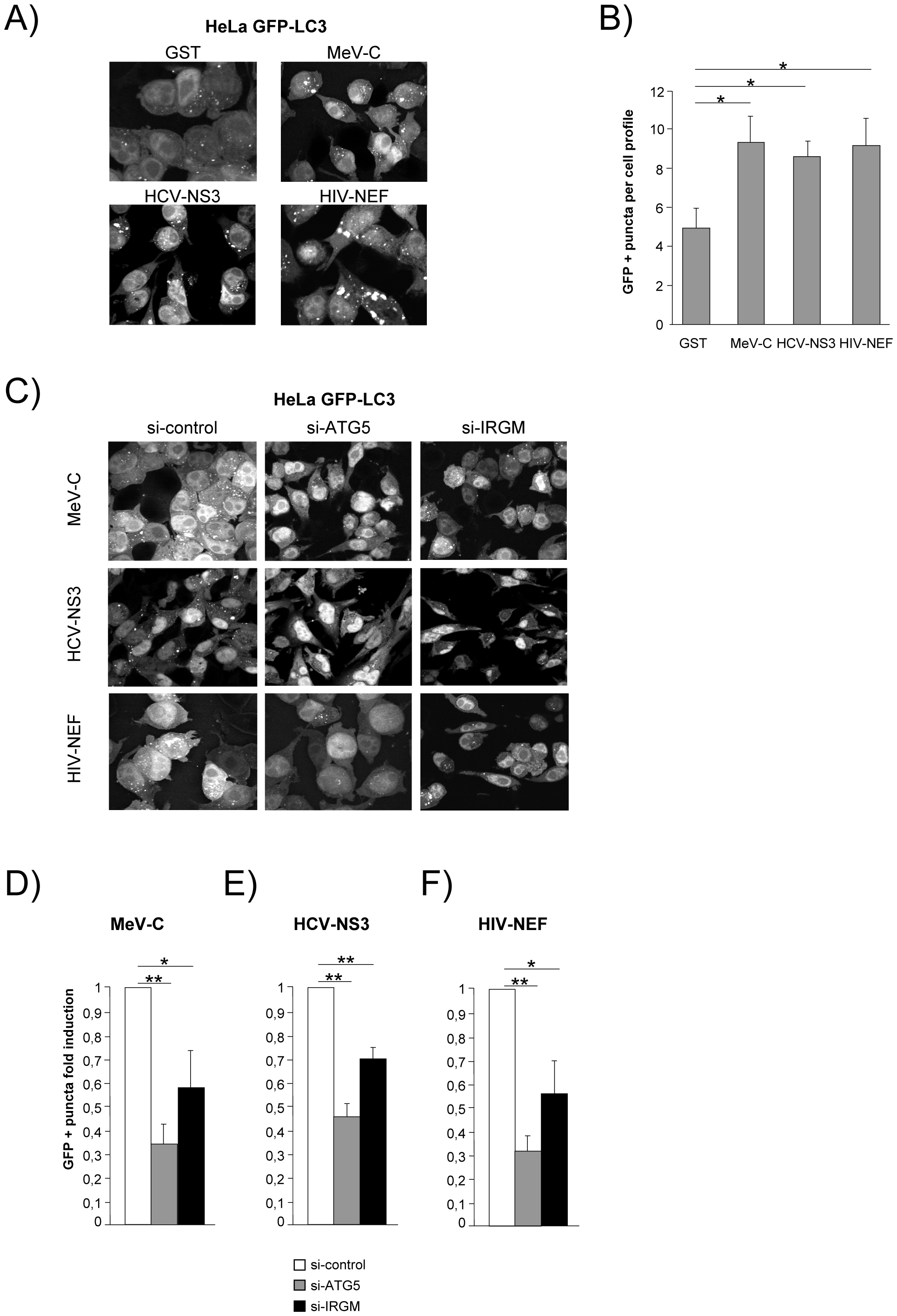 MeV-C, HCV-NS3 and HIV-NEF proteins modulate autophagy via IRGM.