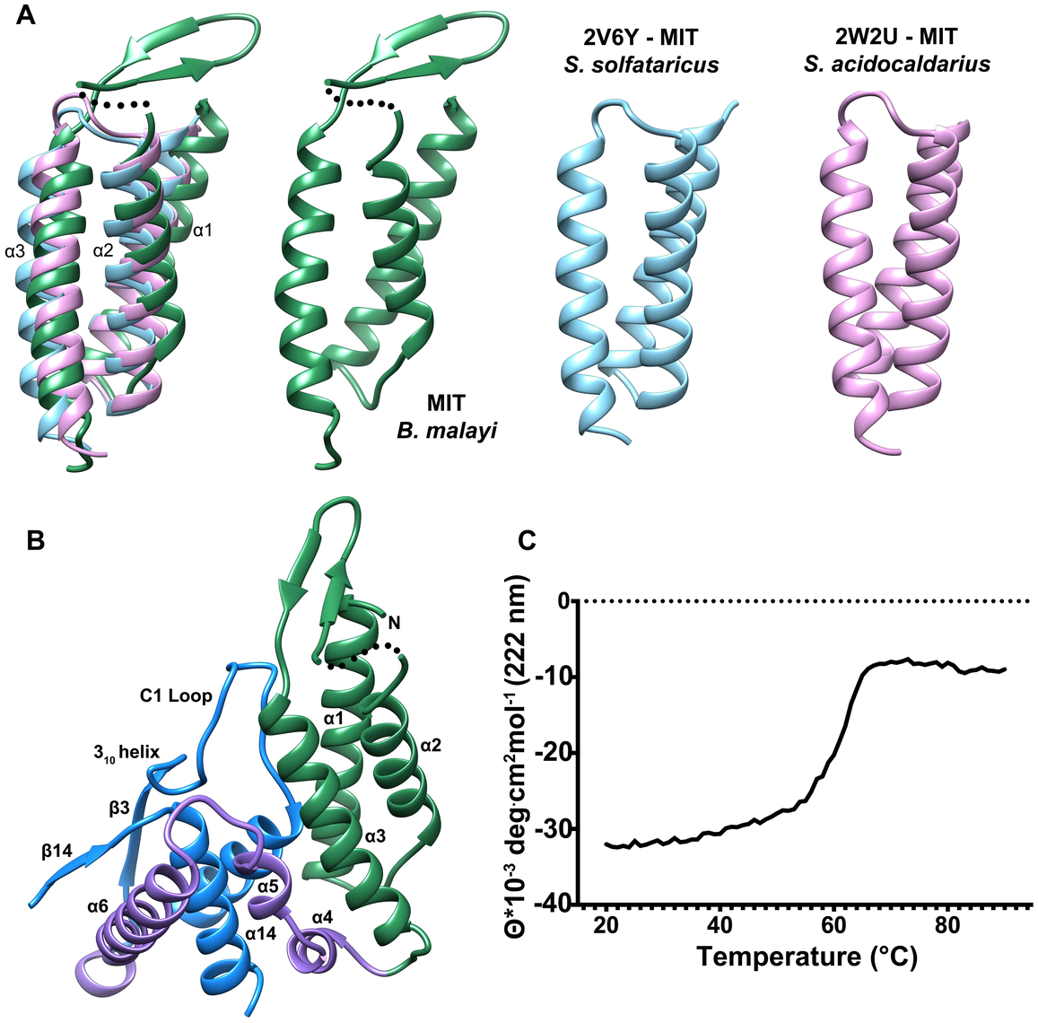 Comparison of the N-terminal MIT-like domain of T6PP with other MIT domains and its interaction with the HAD domain.