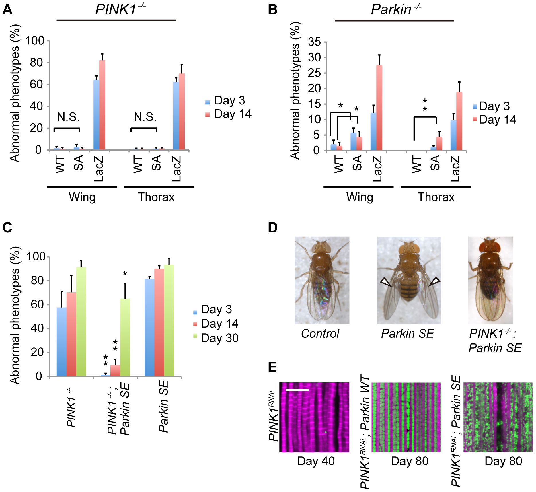 Flies expressing SE Parkin show different wing phenotypes in the presence or absence of PINK1.
