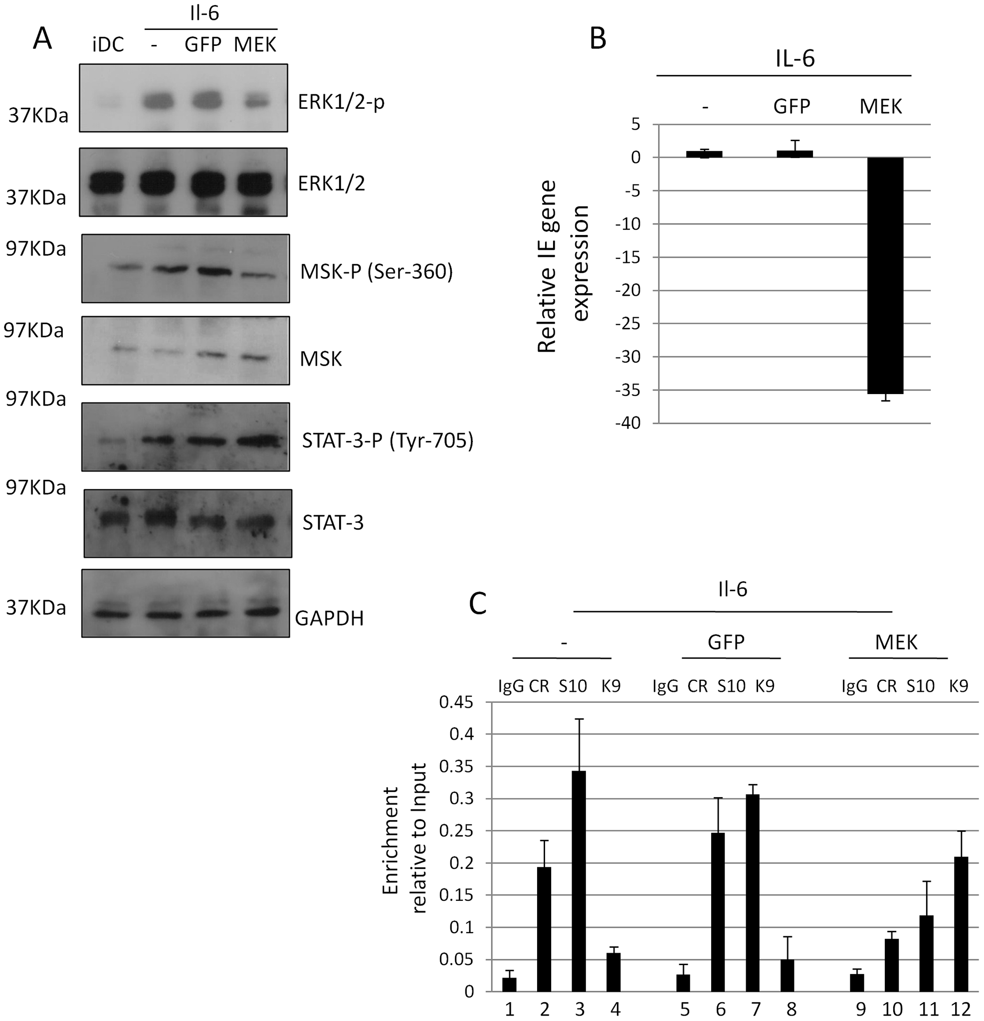 A dominant negative MEK1 blocks IE gene expression and CREB and histone H3 phosphorylation at the MIEP.