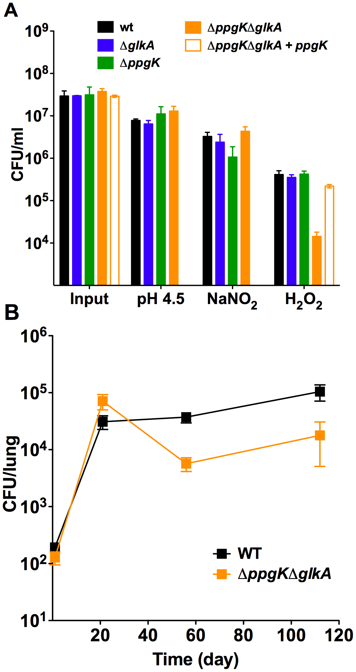 The glucokinase double mutant is hypersusceptible to hydrogen peroxide, but attenuated in phagocyte oxidase deficient mice.
