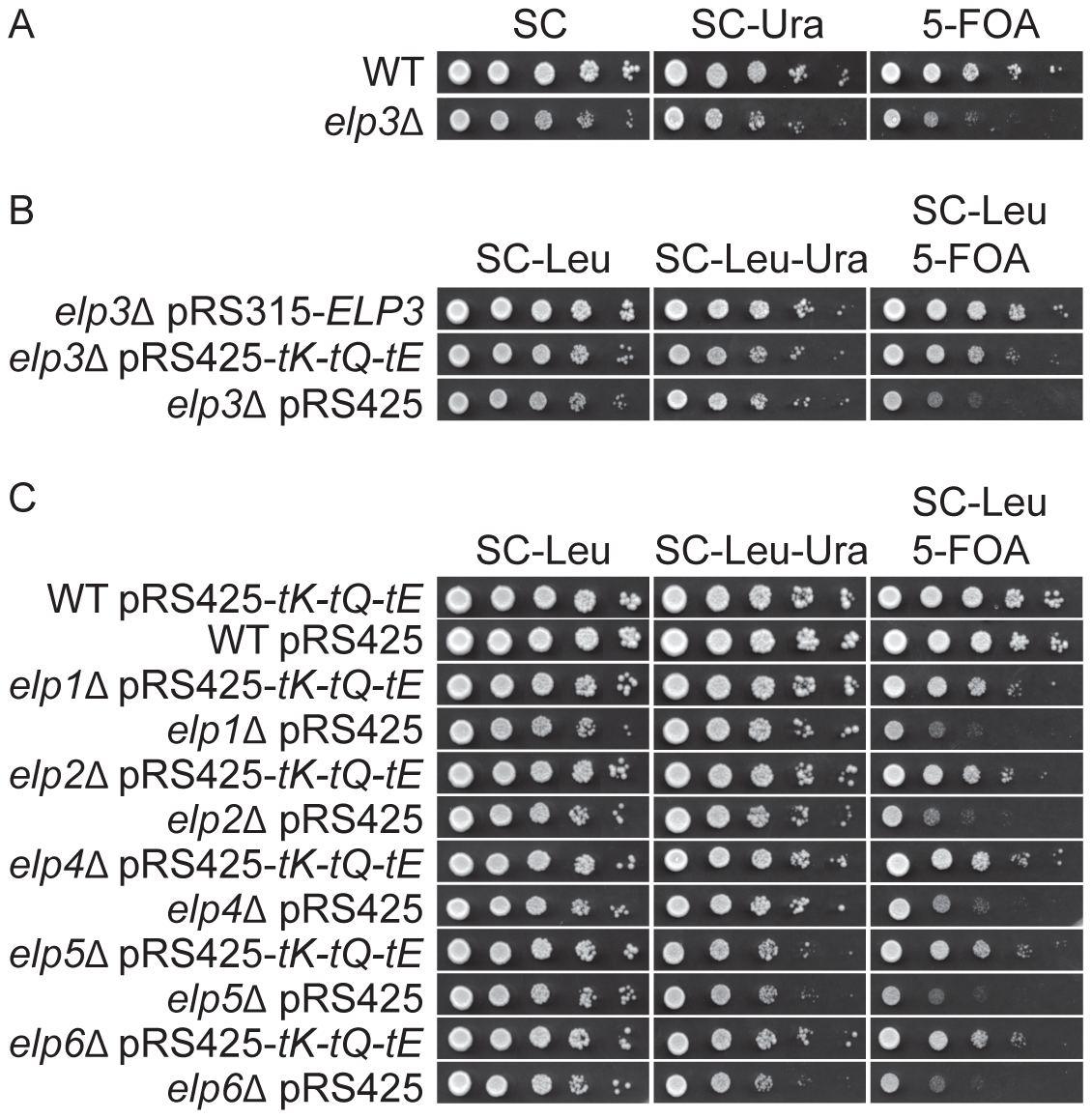 Increased levels of tRNA<sup>Lys</sup><sub>s<sup>2</sup></sub><sub>UUU</sub>, tRNA<sup>Gln</sup><sub>s<sup>2</sup></sub><sub>UUG</sub>, and tRNA<sup>Glu</sup><sub>s<sup>2</sup></sub><sub>UUC</sub> suppress the telomeric silencing defect of Elongator mutants.