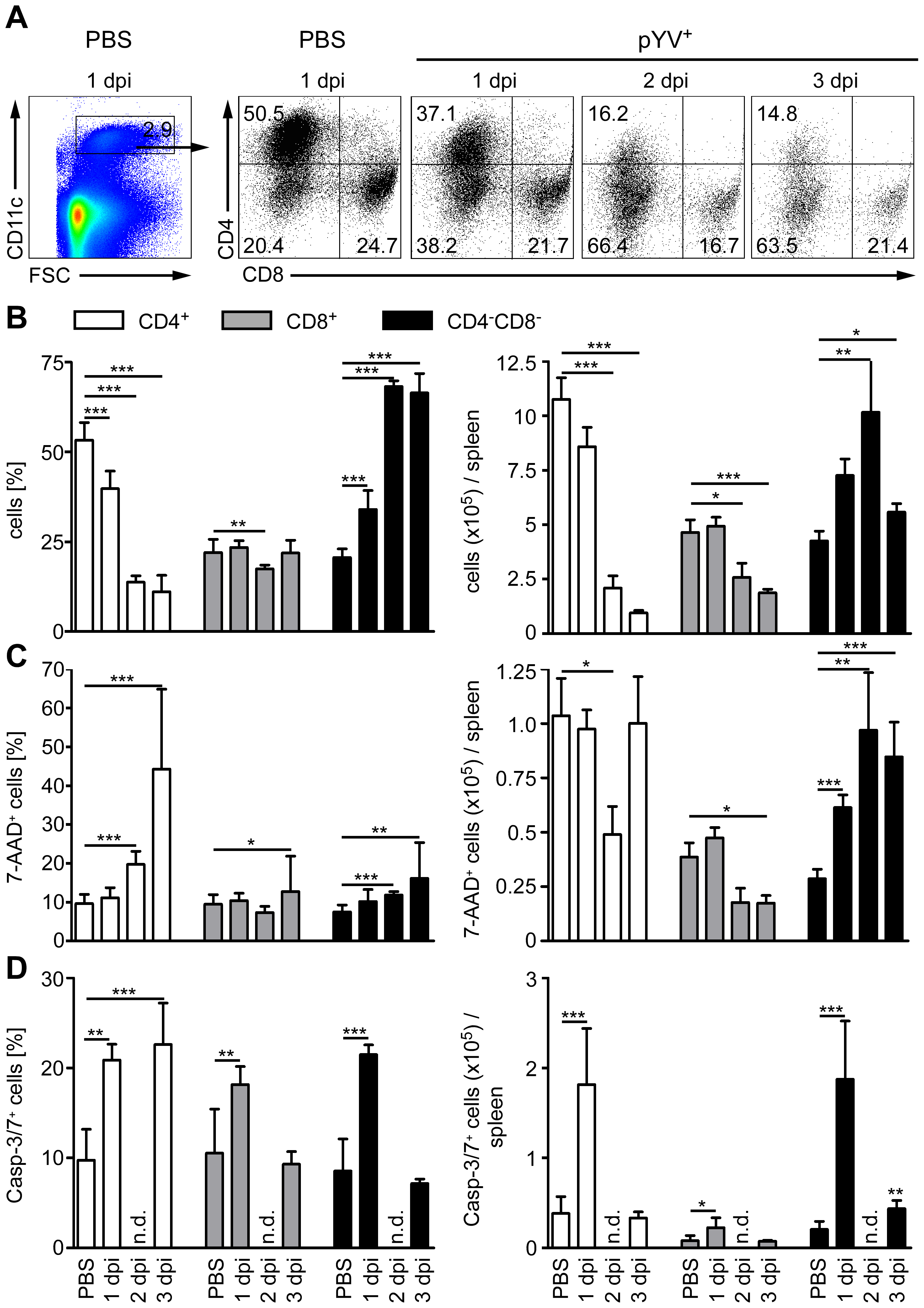 Analysis of DC subpopulations in mice infected with Ye.