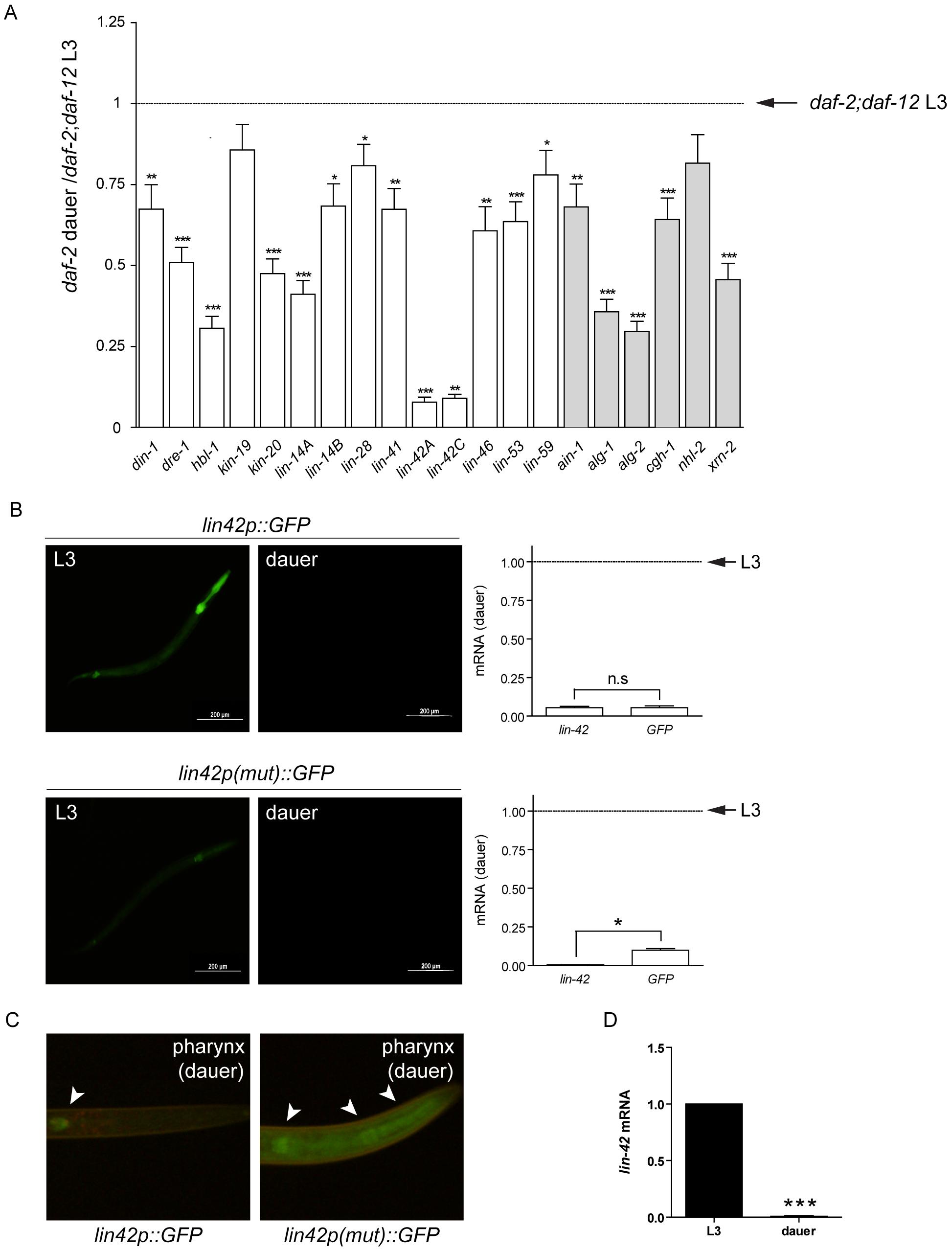 DAF-12 represses expression of target genes during dauer formation.