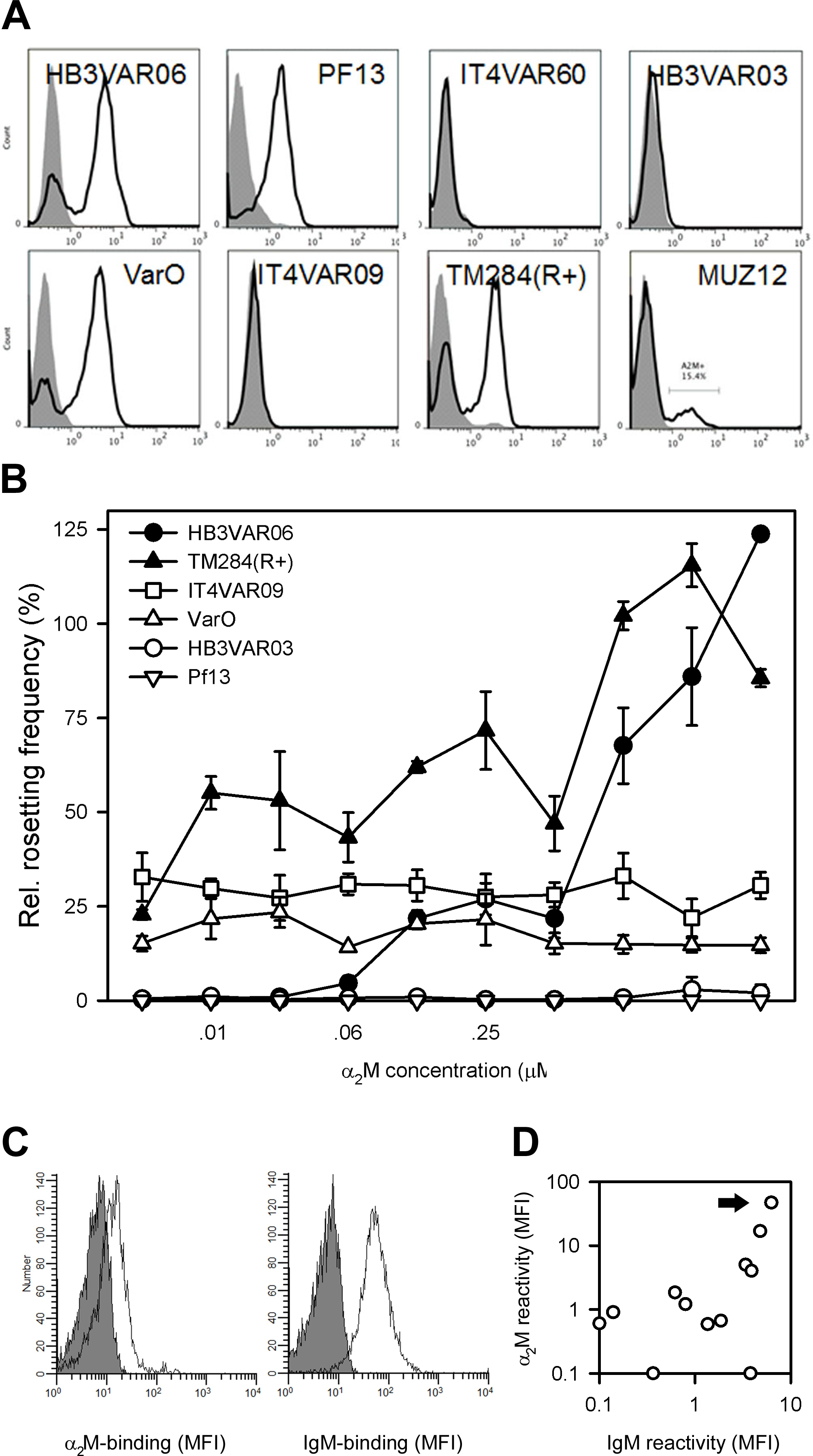 α<sub>2</sub>M binding in parasites not expressing HB3VAR06.