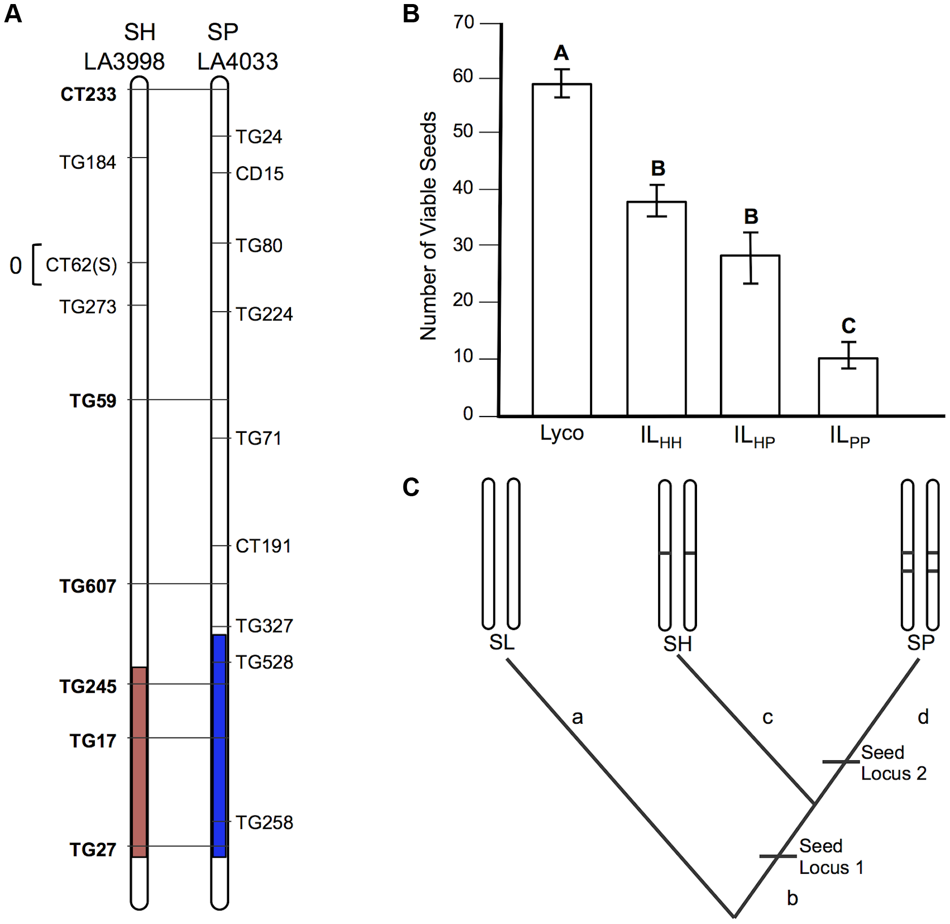 Test of allelism at seed sterility locus <i>sss1.2</i>.