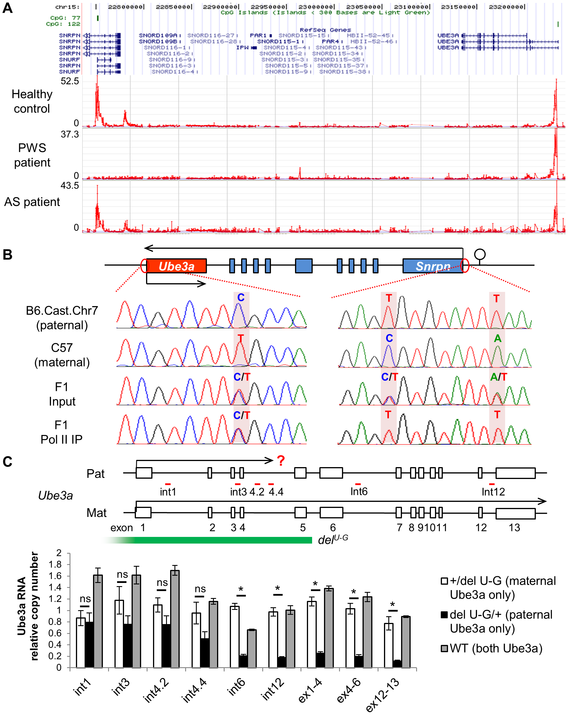 Both promoters of <i>Ube3a</i> are enriched with histone H3 lysine 4 trimethylation (H3K4me3), bound by RNA polymerase II, and actively transcribed.