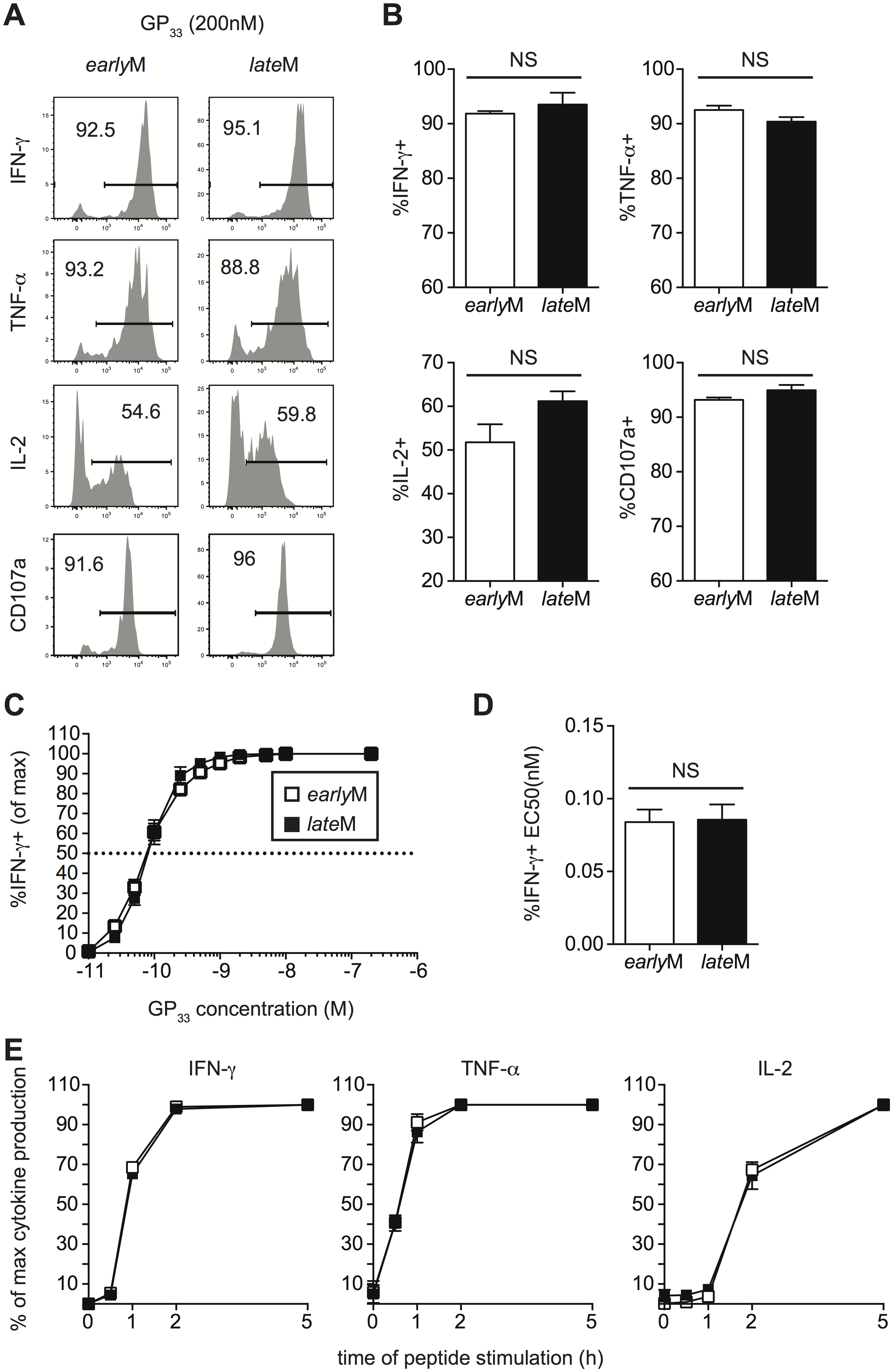 Cytokine production, degranulation, and functional avidity, of CD62Lhi memory are not influenced by time.