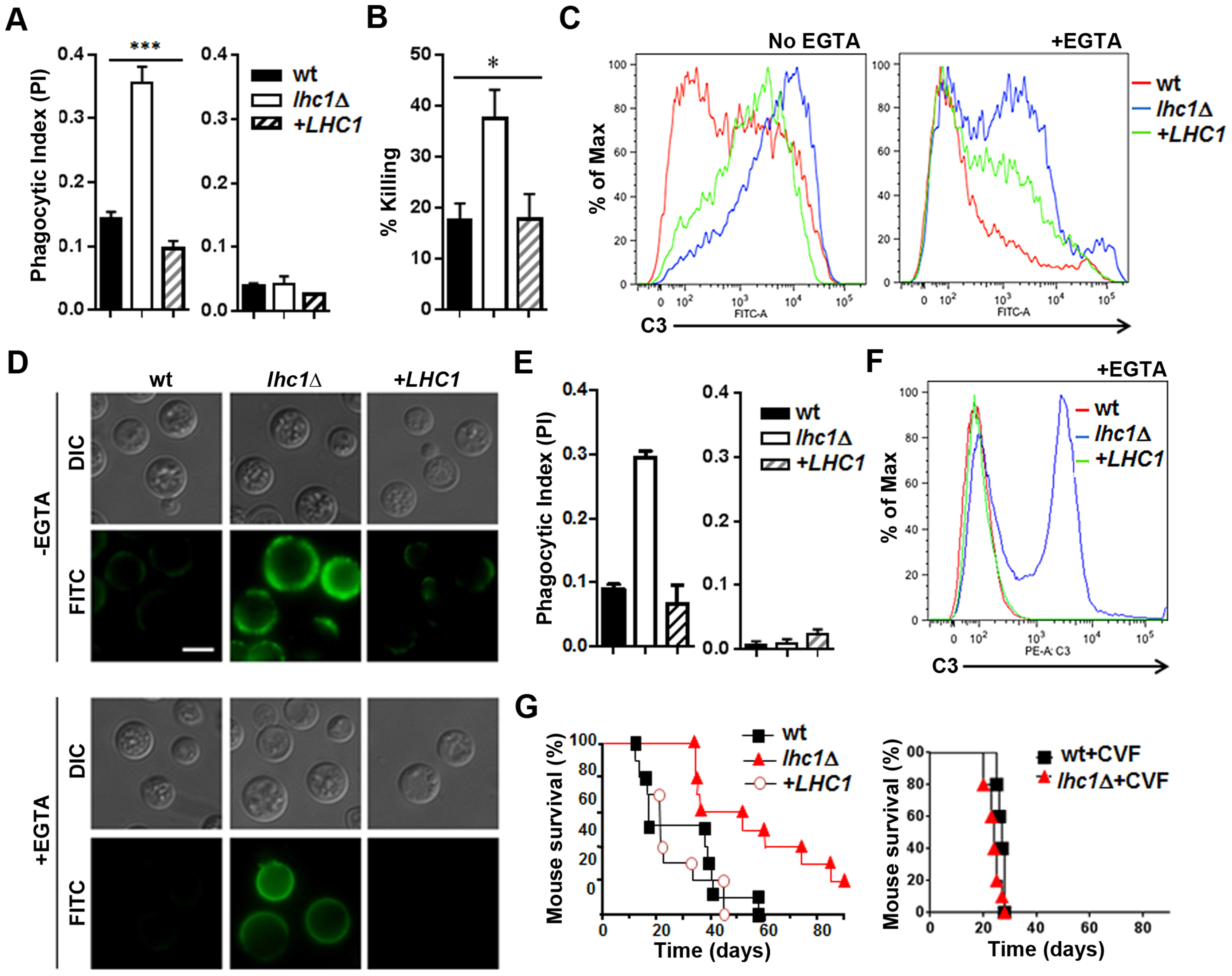 Deletion of <i>LHC1</i> results in increased C3 binding from human or mouse serum and reduced virulence in a mouse model.