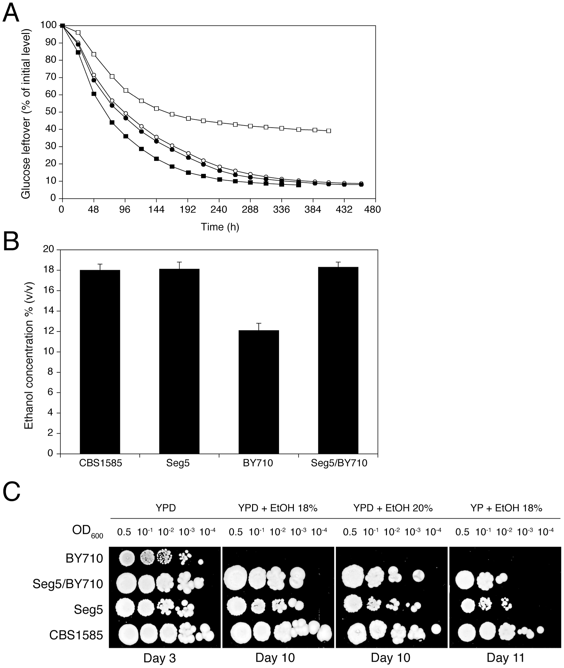 Maximal ethanol accumulation capacity and ethanol tolerance of cell proliferation in the superior parent and its segregant.