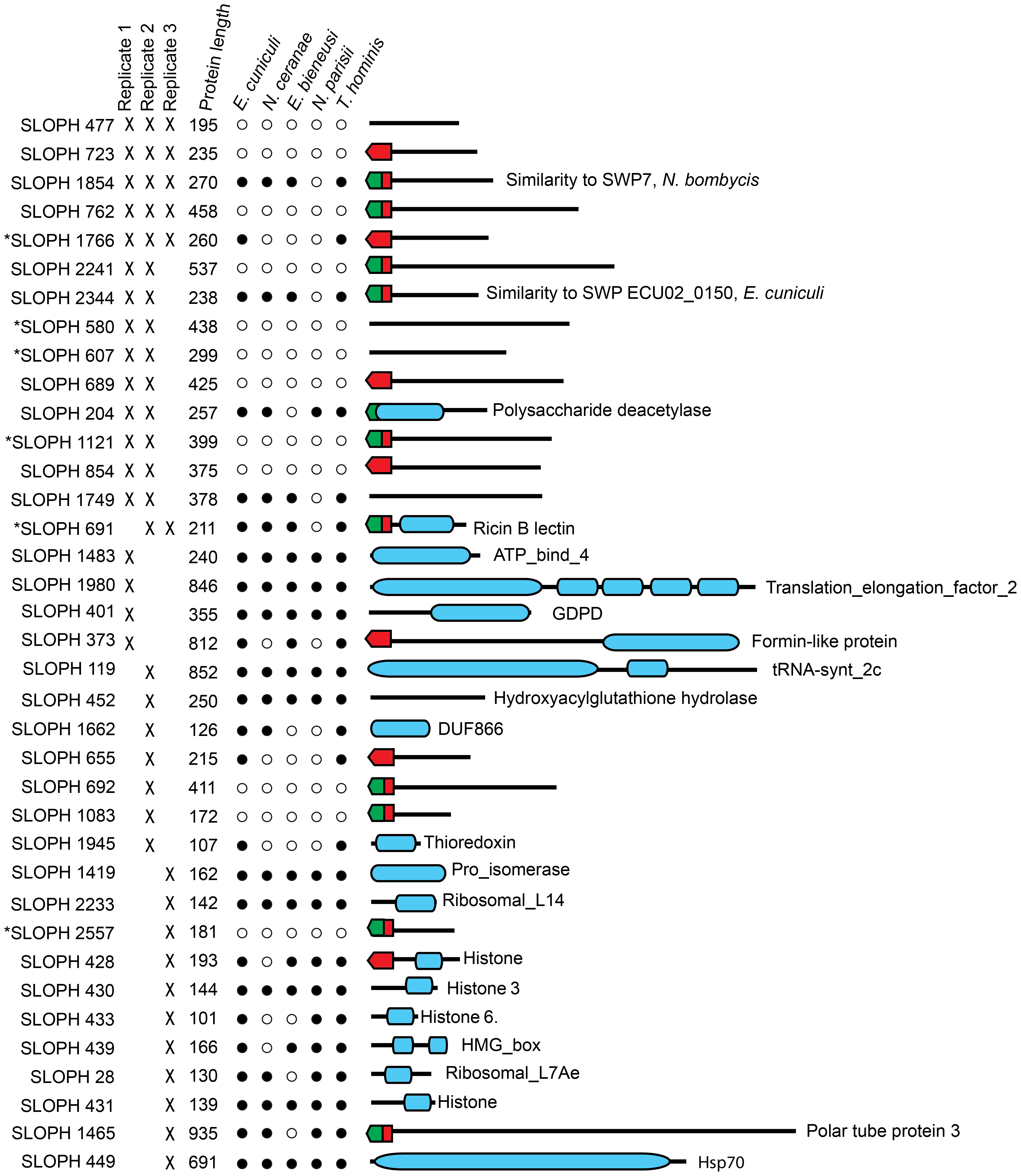 Proteins found in mass spectrometry analysis of medium from germinated <i>S. lophii</i> spores.
