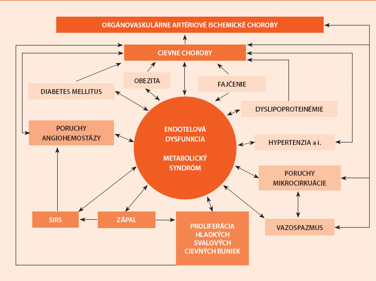 Schéma. Endotelová dysfunkcia a zložité interakcie medzi metabolickým syndrómom a ďalšími cievnymi rizikovými faktormi a patologickými mechanizmami v patogenéze artériových ochorení a orgánovovaskulárnou artériovou ischemickou chorobou