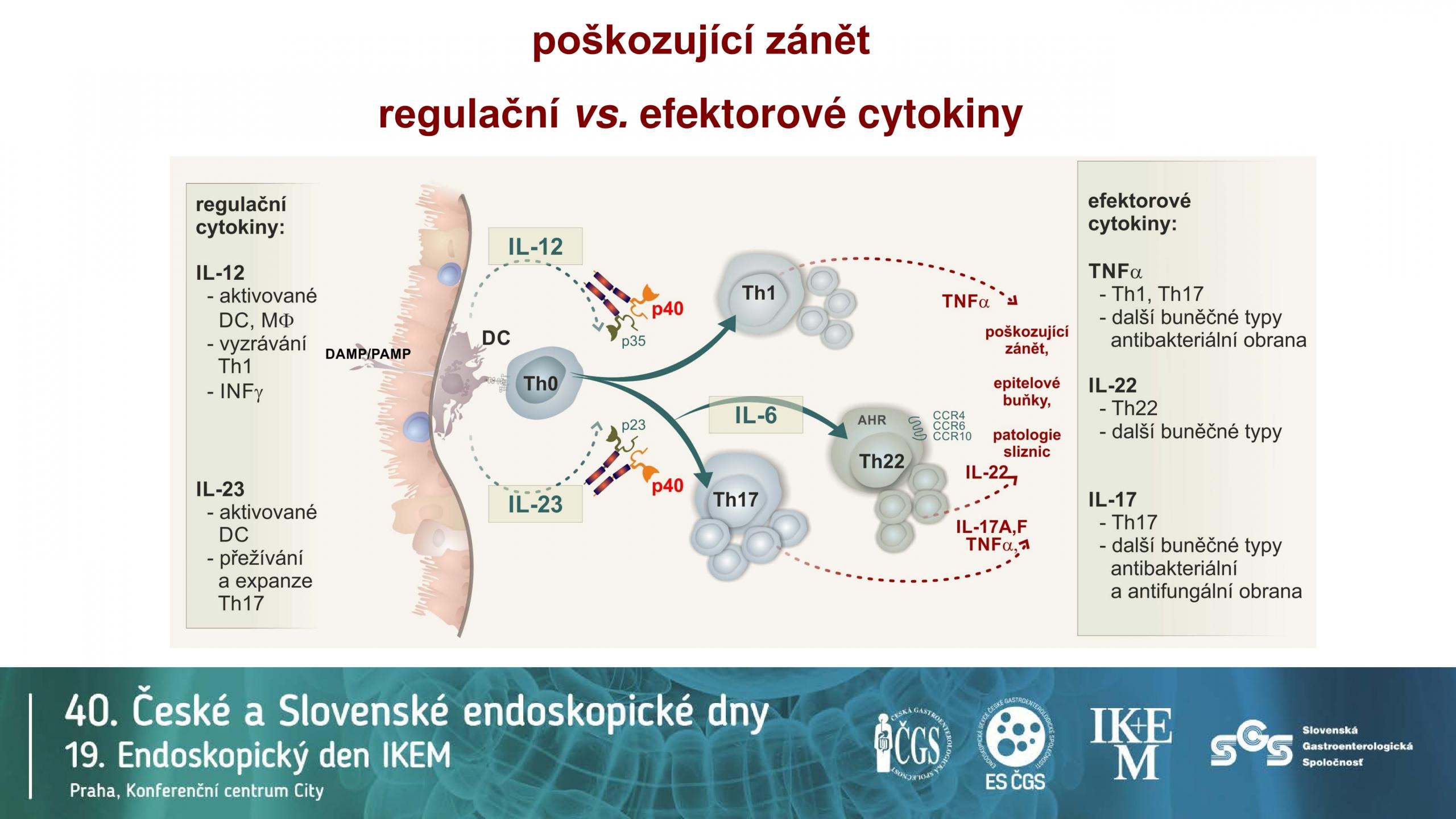 Klíčová úloha IL12/IL23 v patogenezi IBD - 12