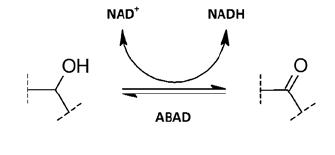 Oxidace alkoholů a redukce ketonů prostřednictvím ABAD