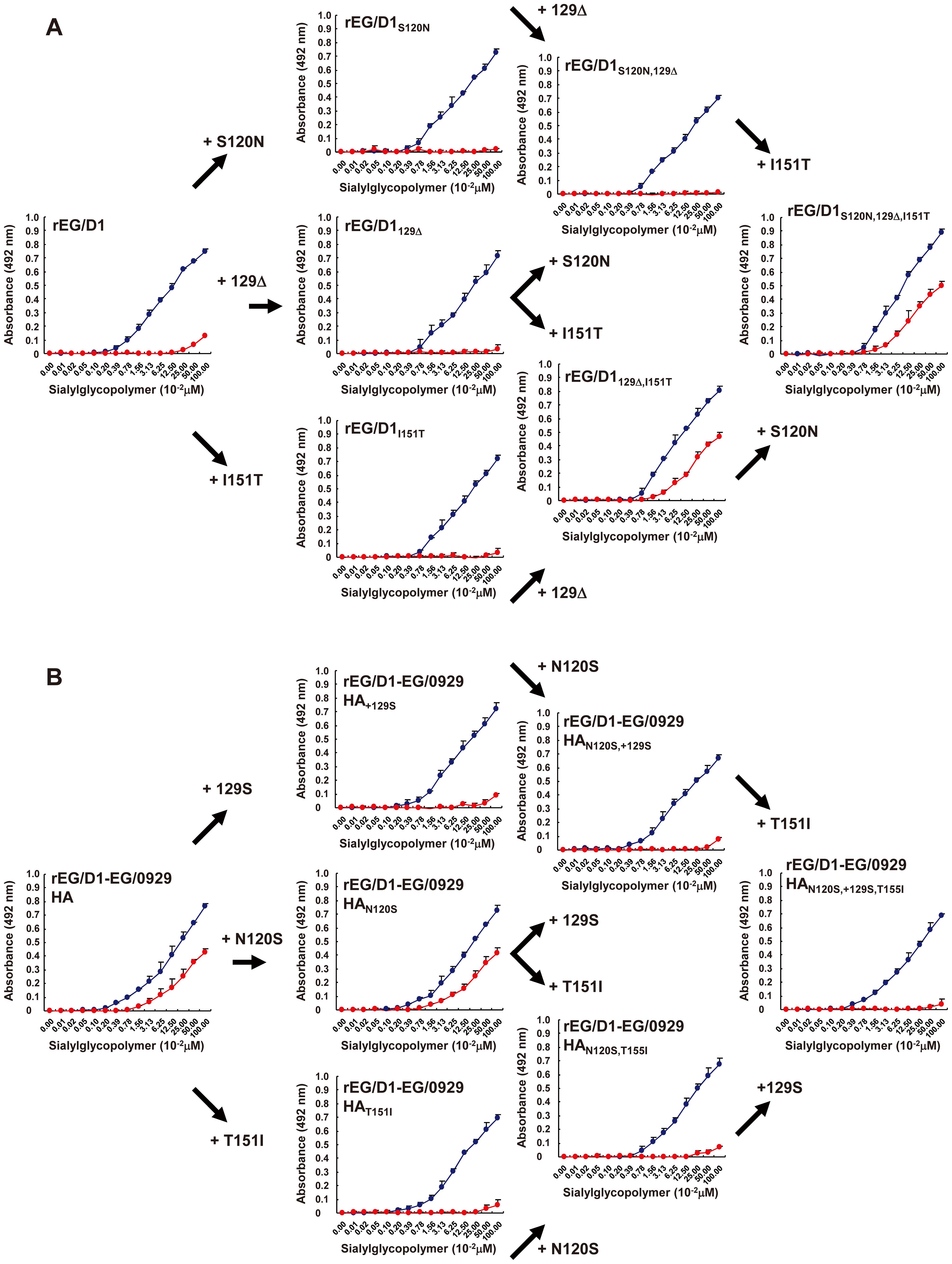 Effect of HA mutations in sublineage BI viruses on receptor specificity of EG/D1 HA.