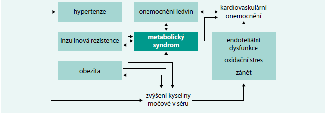 Schéma 2. Vztahy mezi hladinou kyseliny močové a kardiovaskulárním onemocněním.