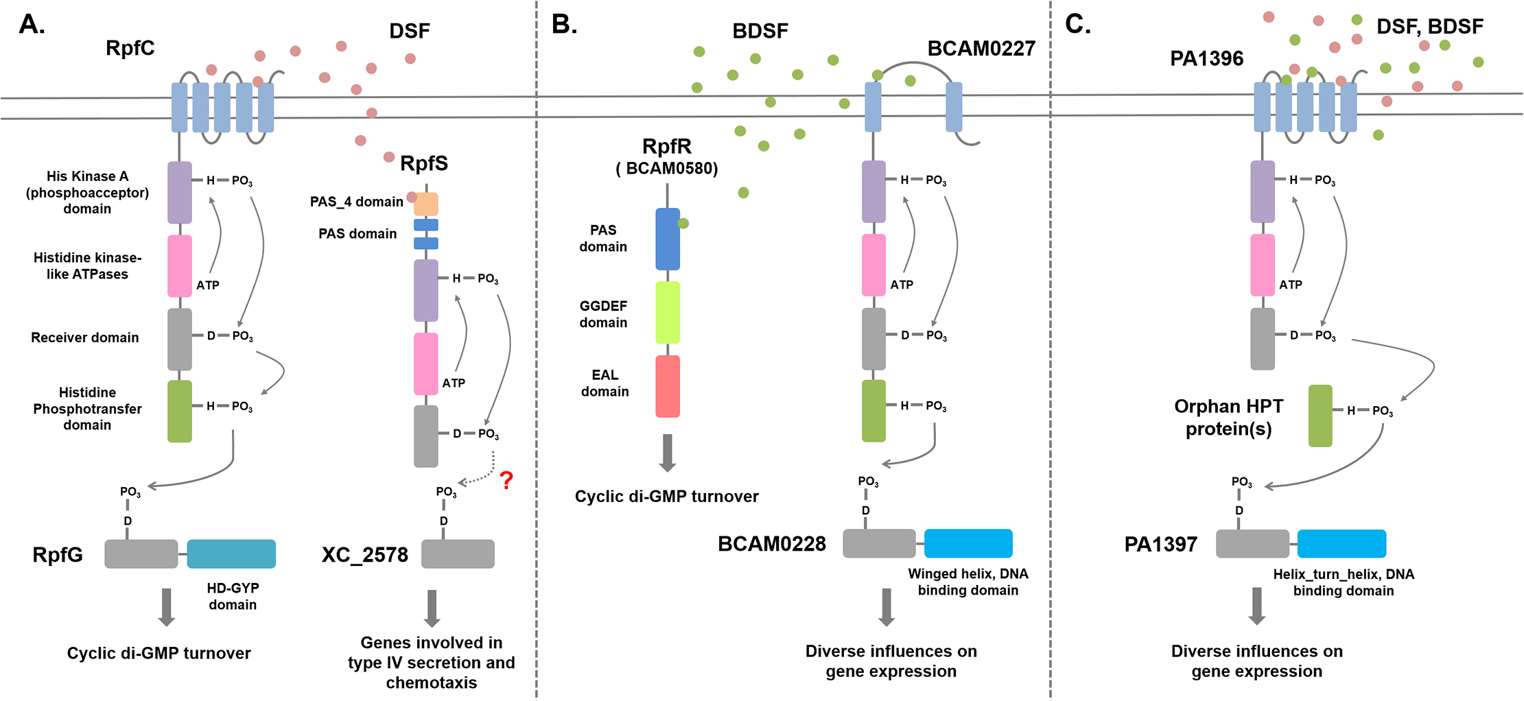 Signal transduction mechanisms for DSF family signals in different bacteria.