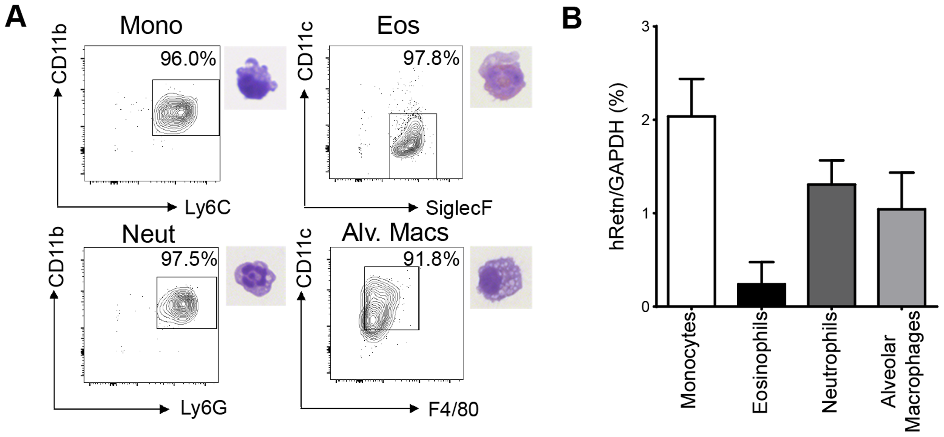 Monocytes, neutrophils and alveolar macrophages express hResistin in <i>Nb</i>-infected lungs.