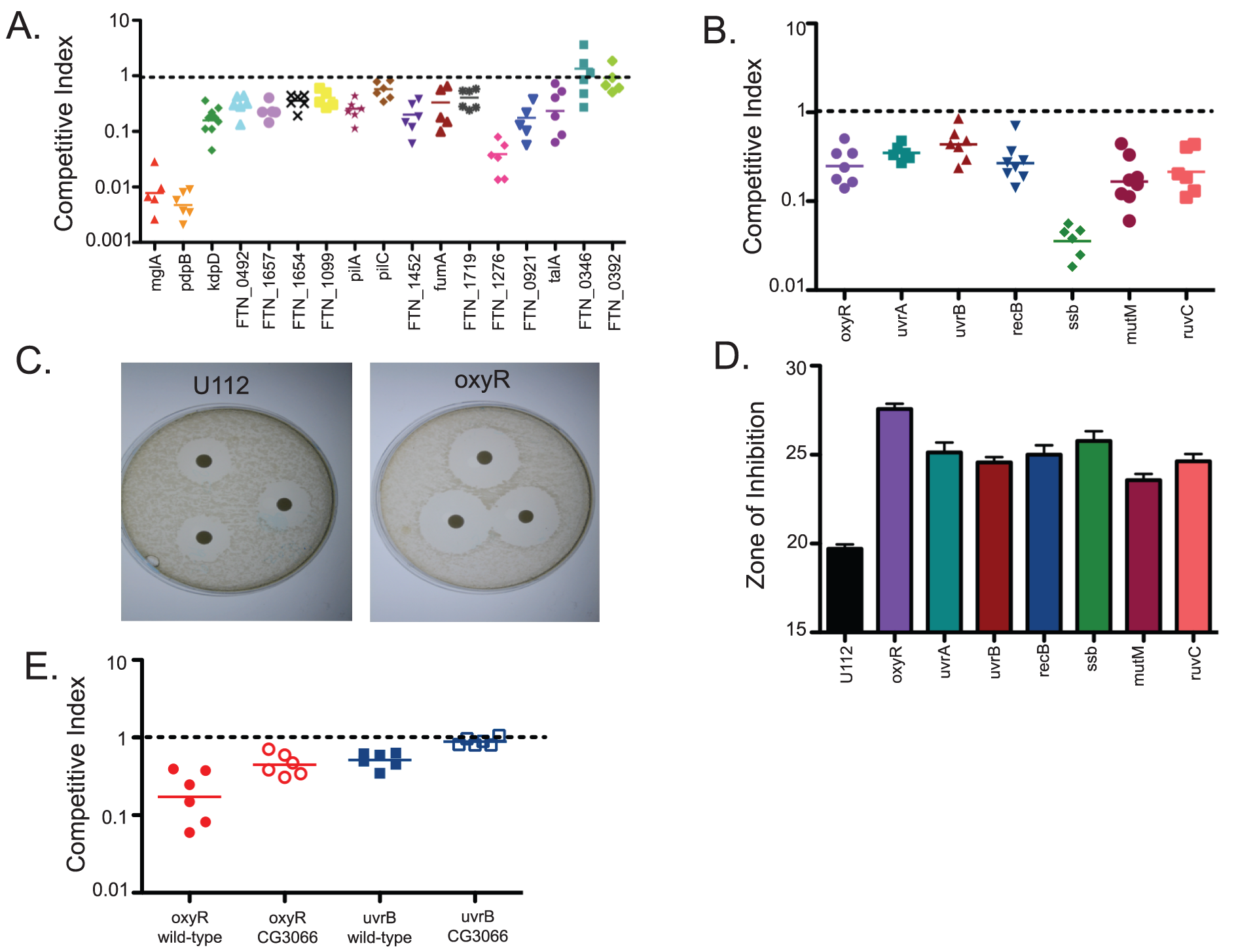 A negative selection screen of <i>F. novicida</i> mutants identifies bacterial genes important for bacterial growth and survival within the fly.