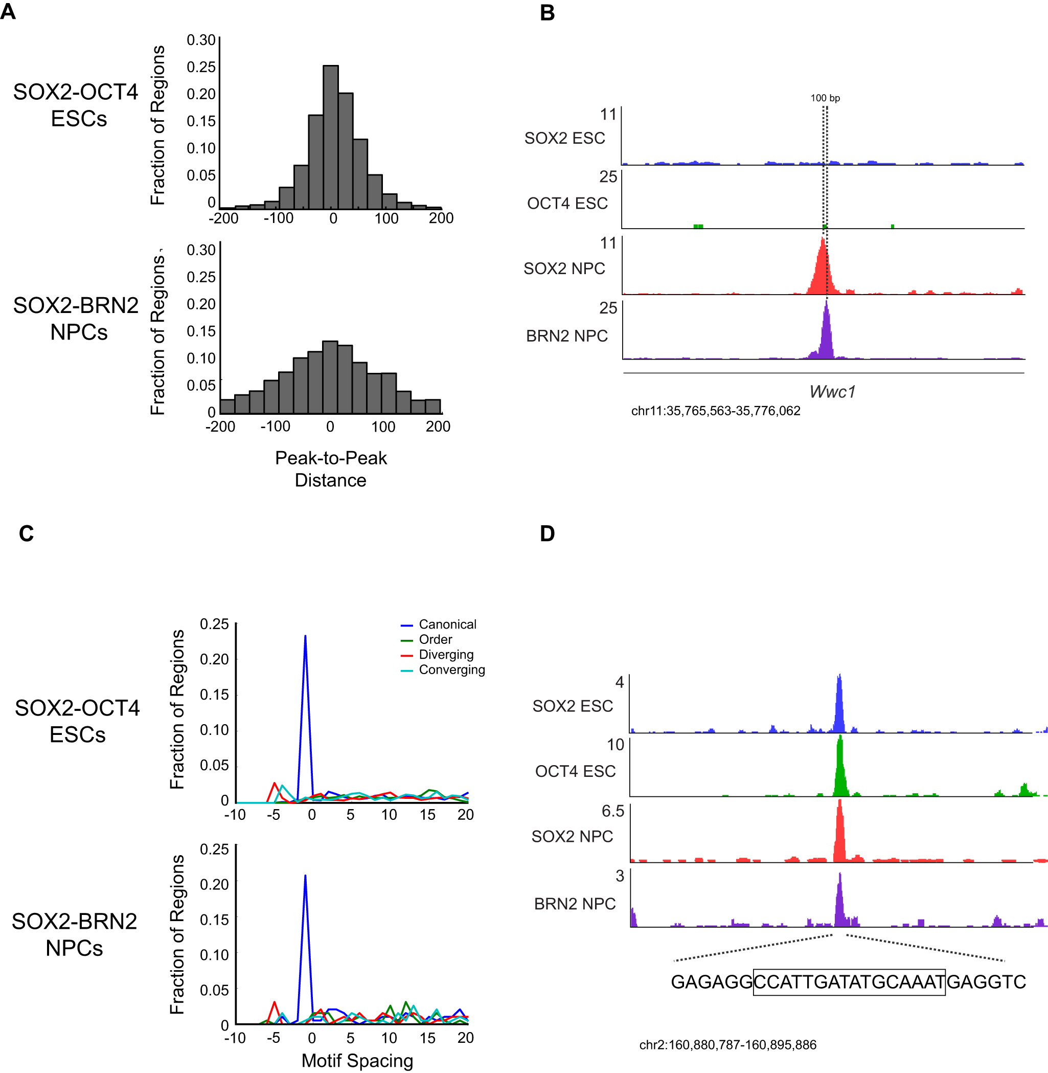 Motif configuration affects binding by SOX2 and cell-type-specific POUs.