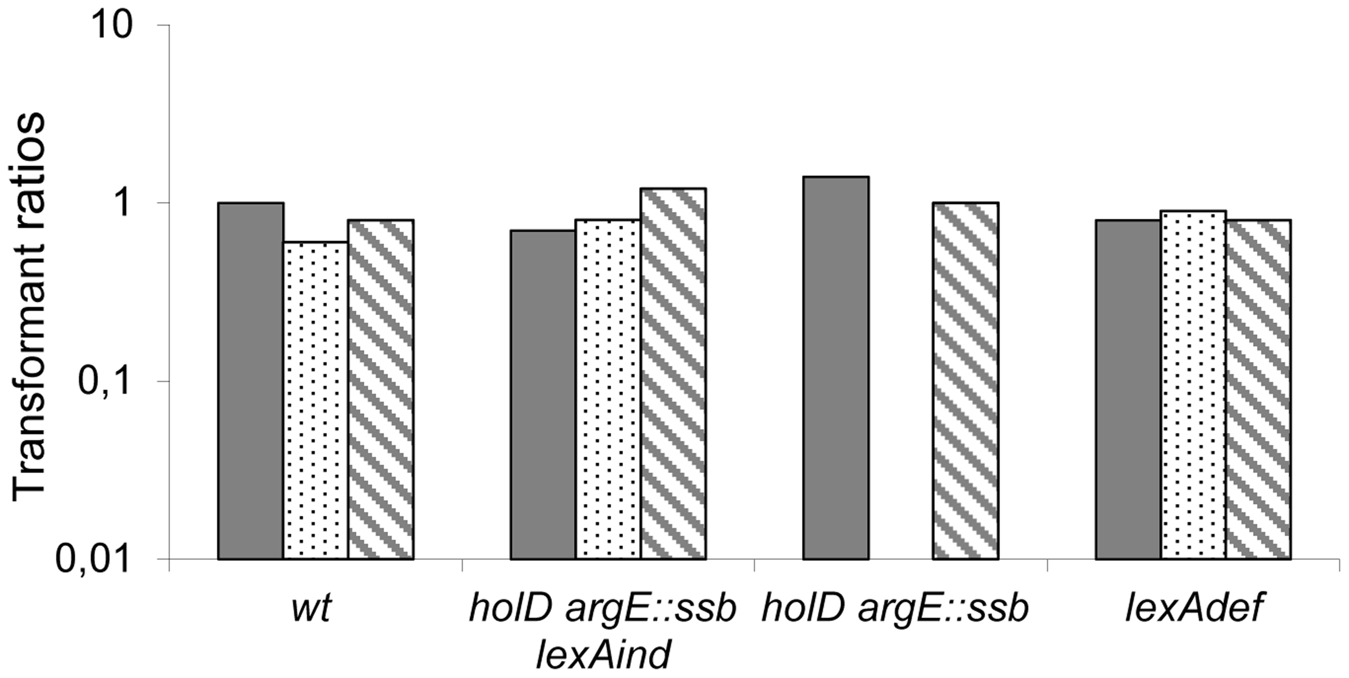 pGB-<i>dinB</i> is lethal to Δ<i>holD argE::ssb</i> only when the SOS response is induced.