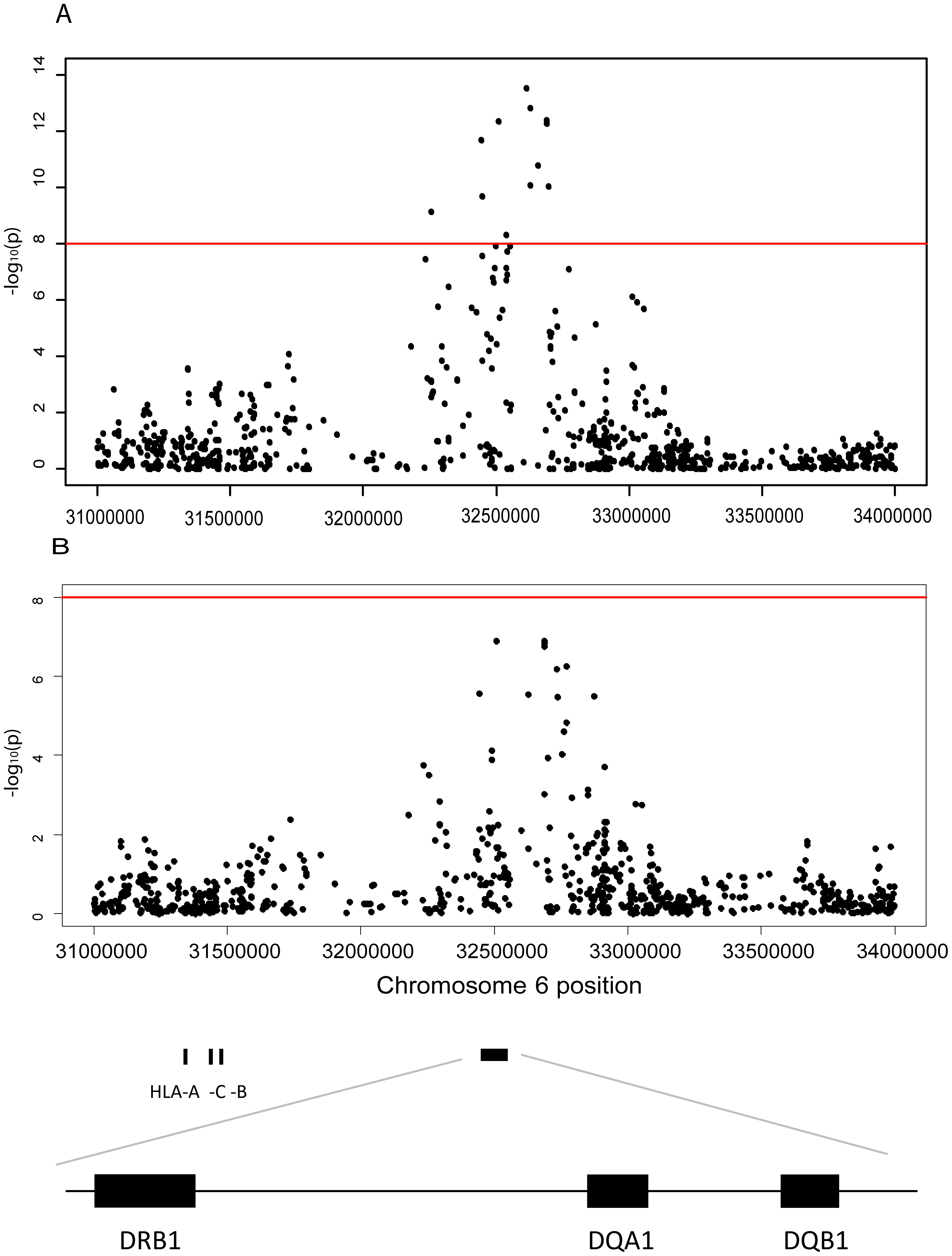 Association between JCA antibody response and markers in the Human Leuococyte region on chromosome 6.
