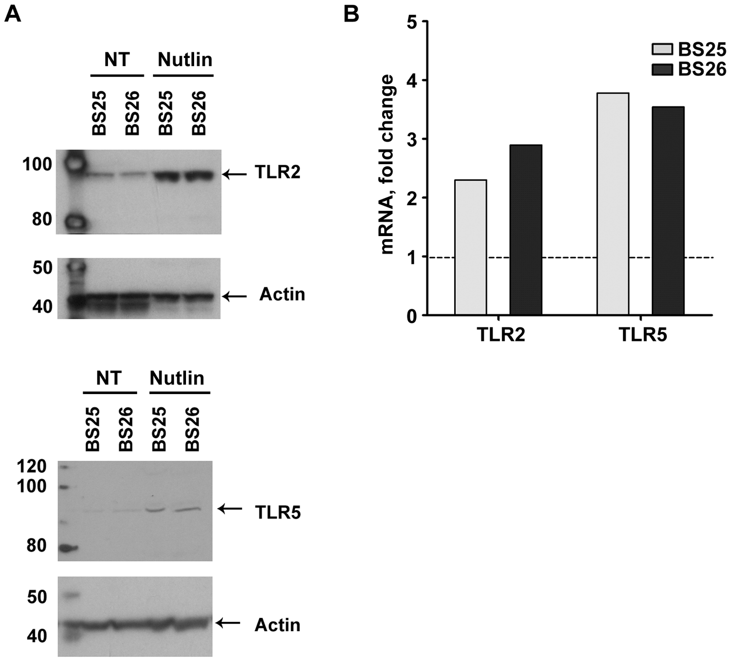 Nutlin induces <i>TLR2</i> and <i>TLR5</i> mRNA expression as well as proteins.