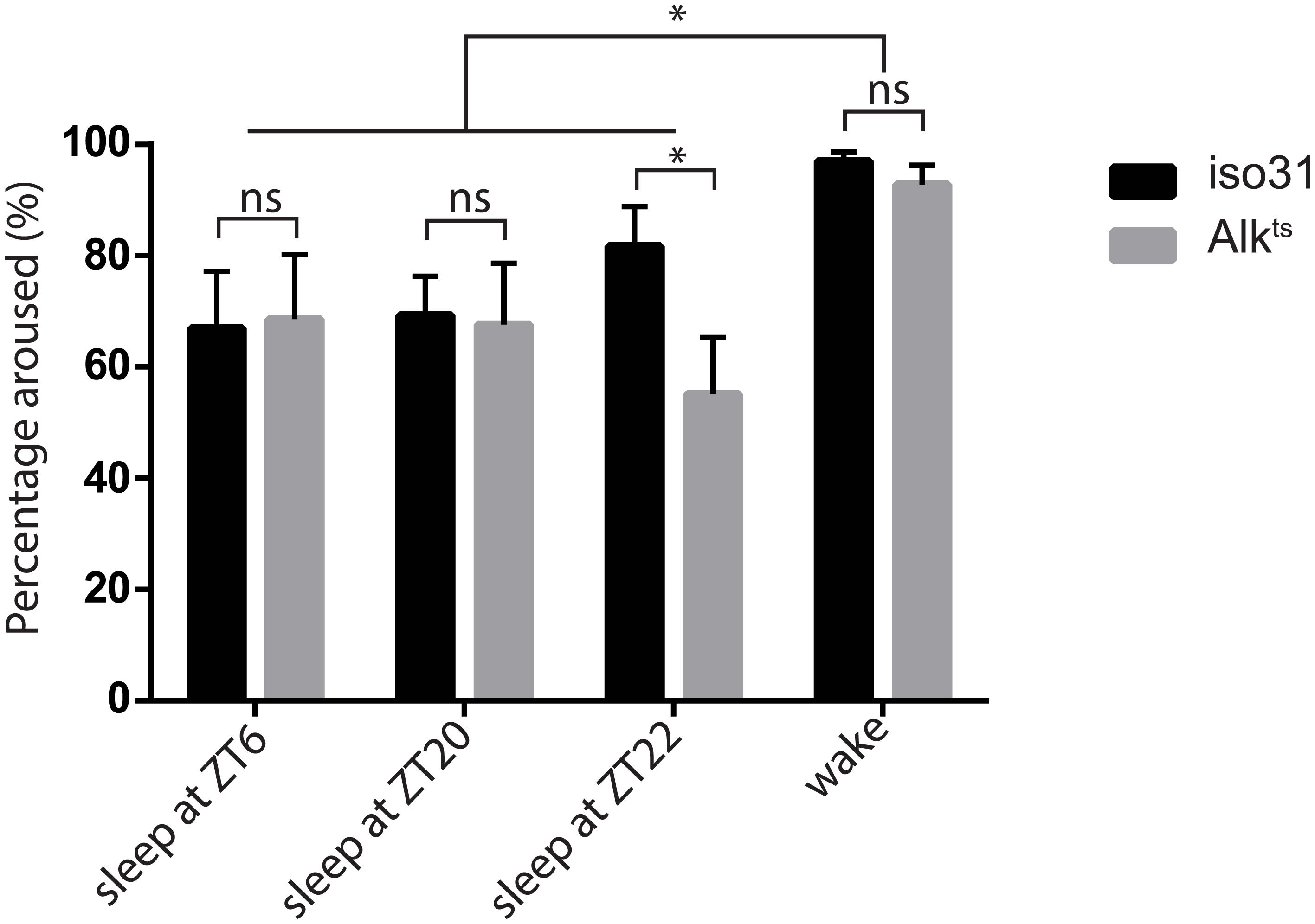 Inactivity of <i>Alk</i><sup><i>ts</i></sup> mutants is due to a prolonged sleep state.