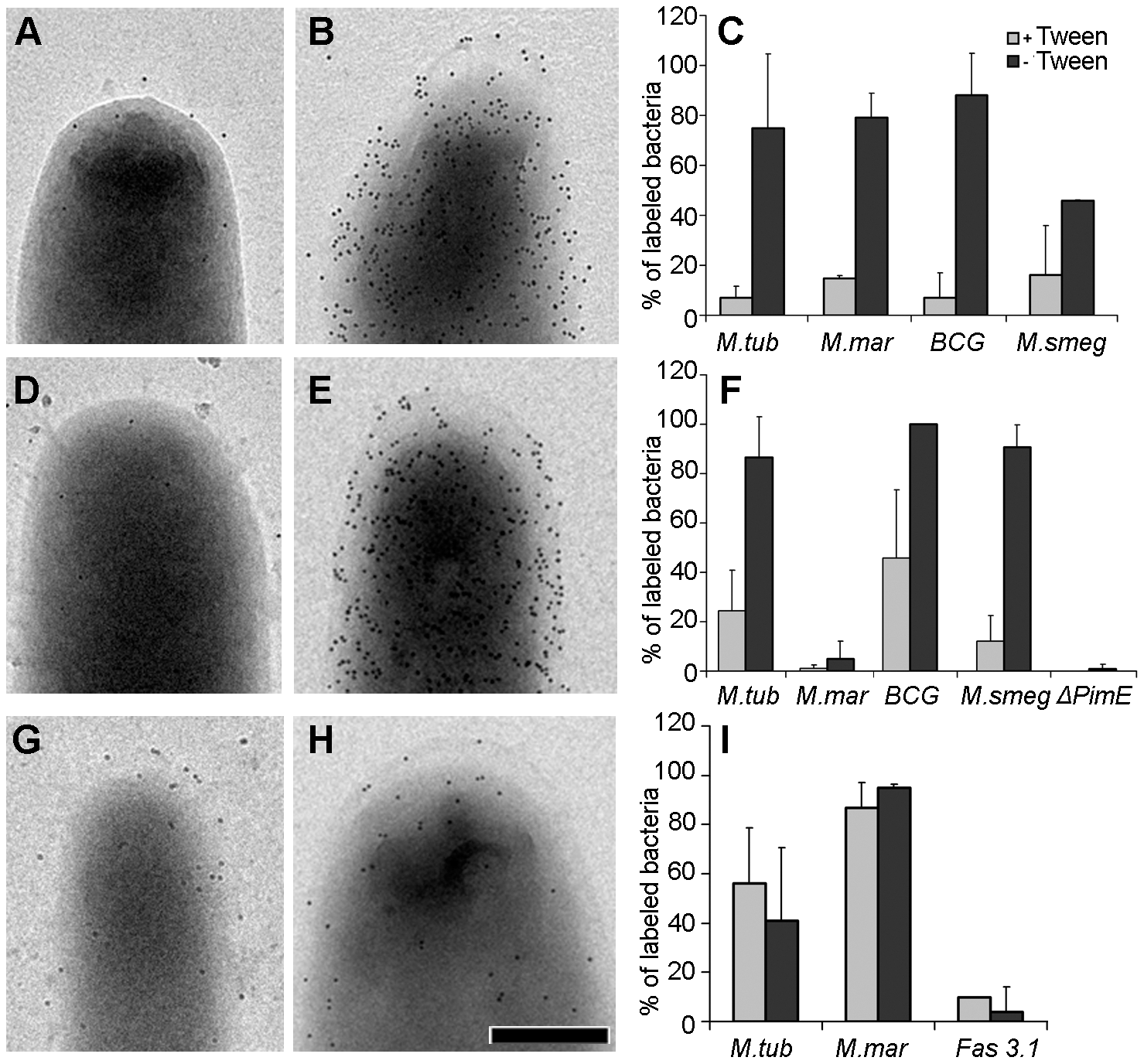 Effect of detergent on the localization of capsular components and the detection of ESX-1 proteins.
