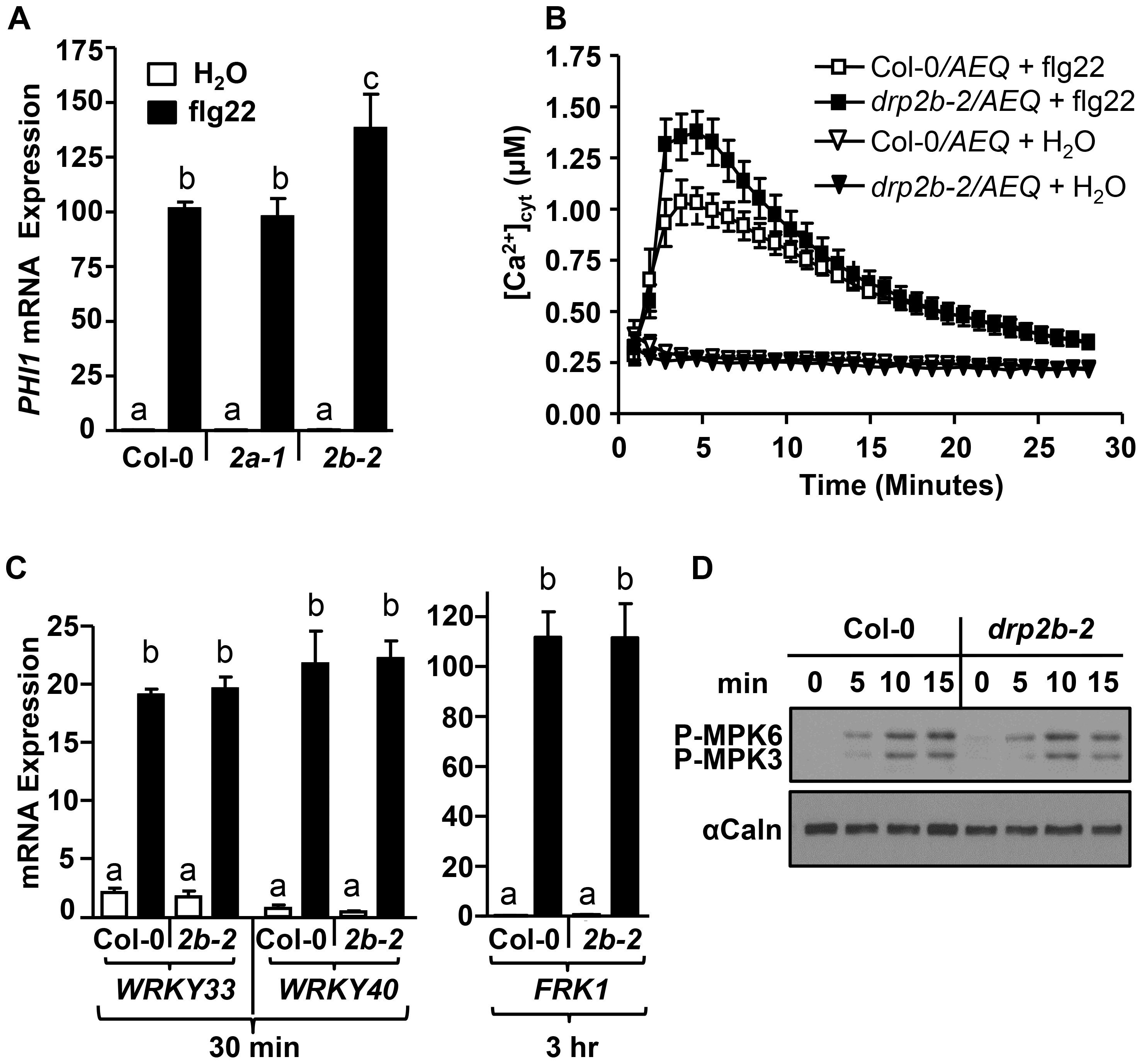 <i>DRP2B</i> is a negative regulator of flg22-induced Ca<sup>2+</sup>-dependent responses but has no apparent role in MAPK-dependent responses.
