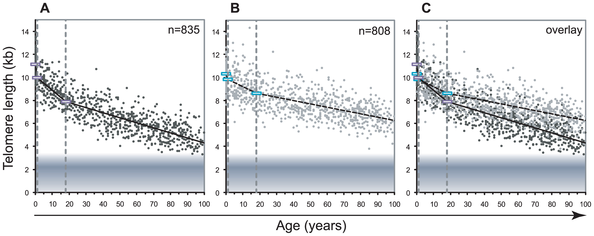Decline in telomere length with age differs between lymphocytes and granulocytes.