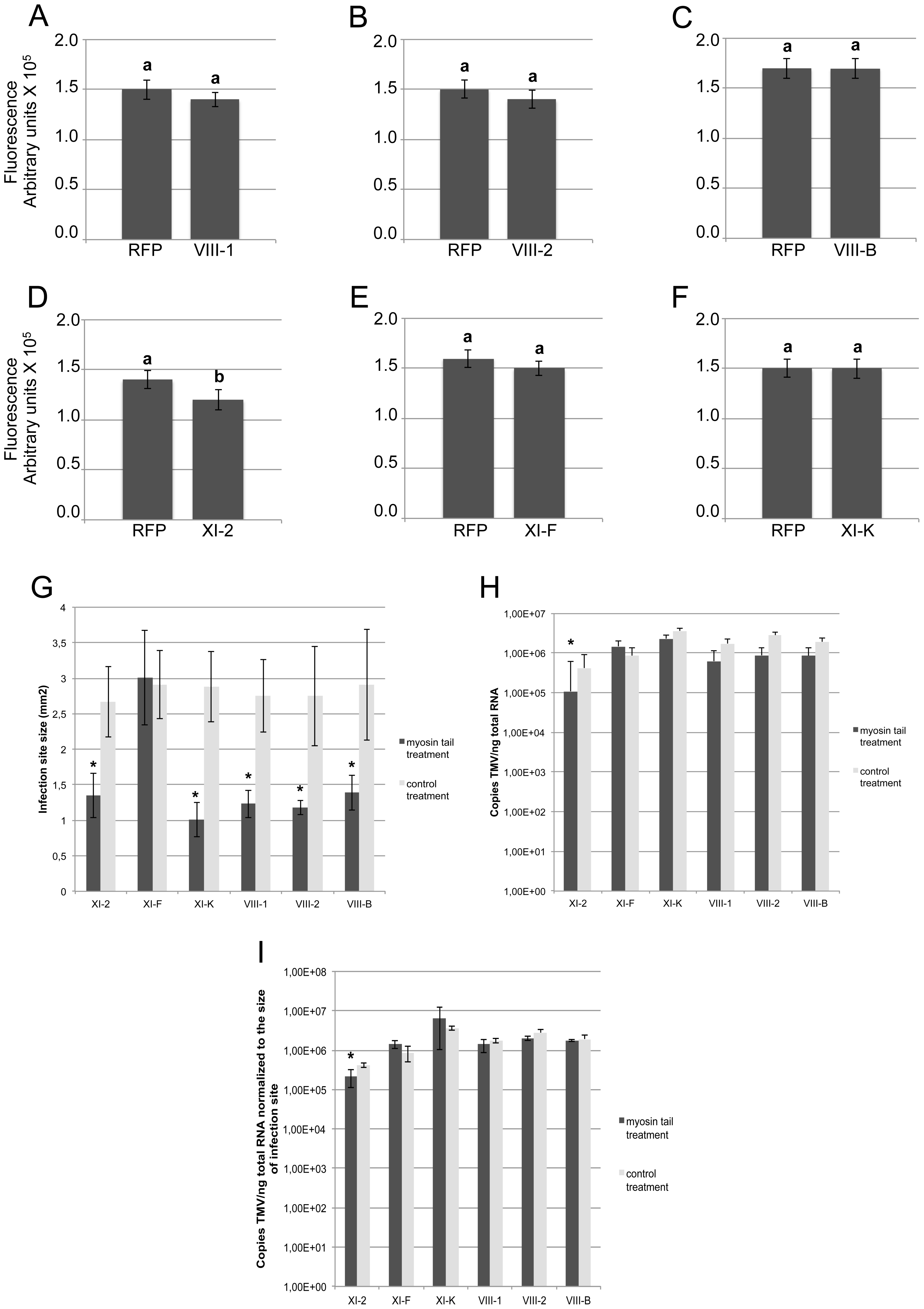 Transient expression of myosin tail XI-2, but not the expression of any of the other tested myosin tails, affects virus replication.