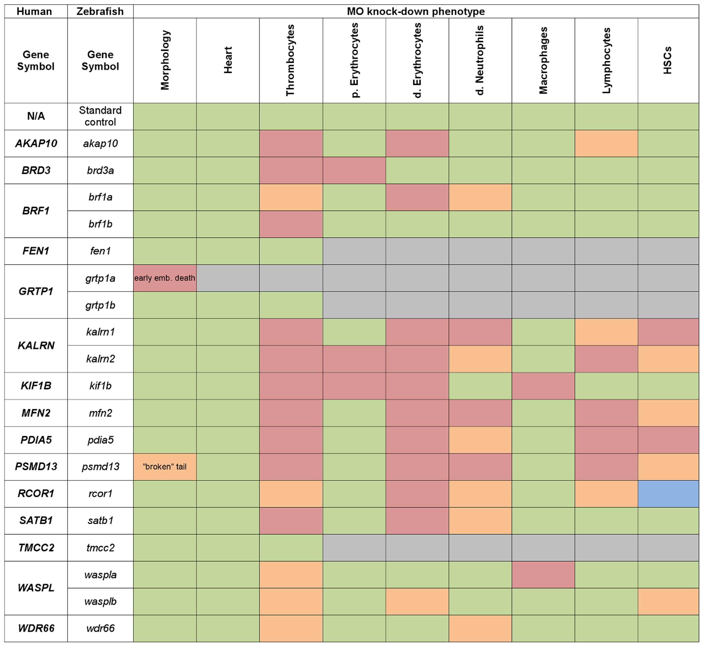 Heat map summarising hematopoietic phenotypes of knock-down of 19 candidate genes.