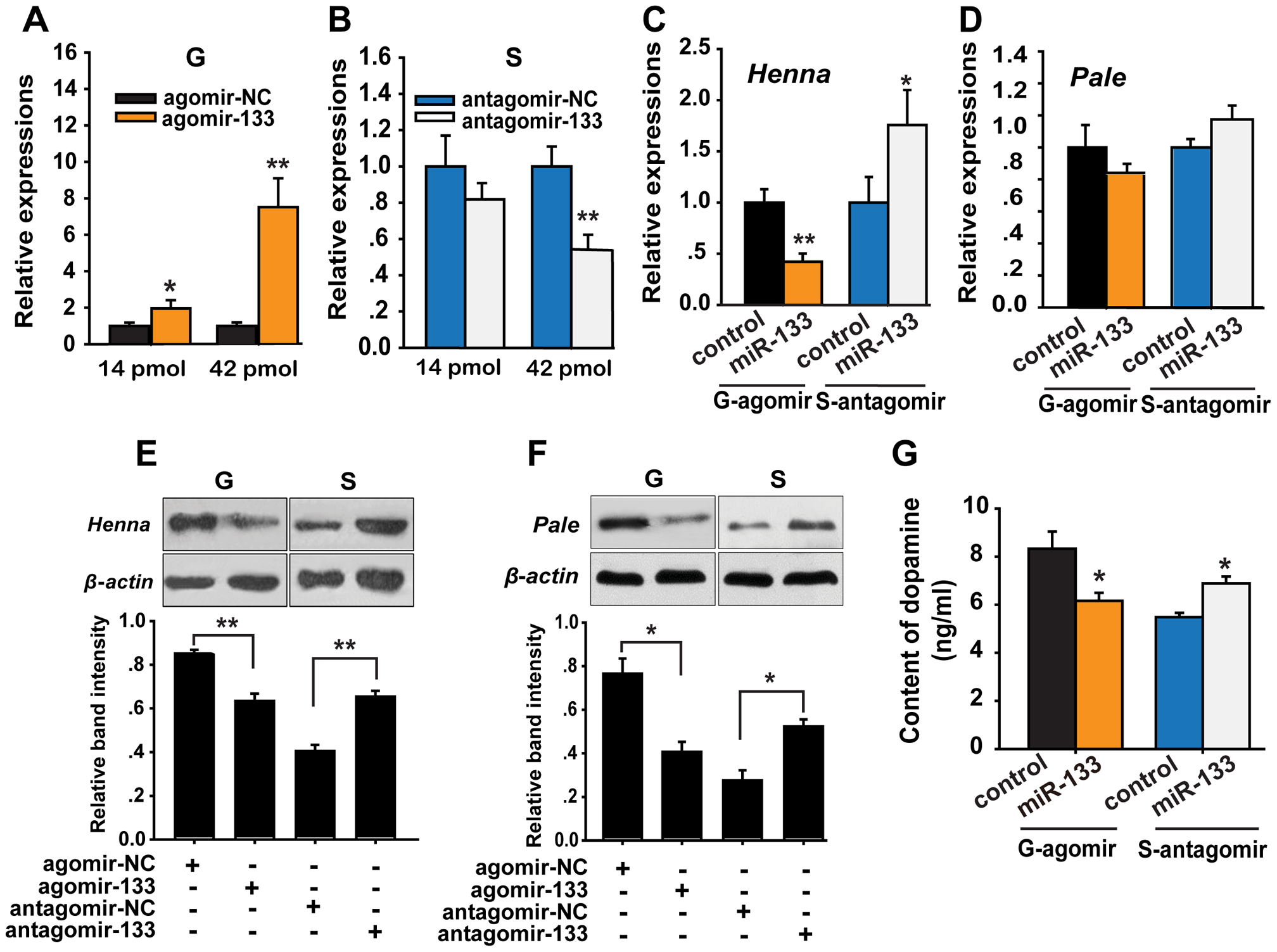 miR-133 controls dopamine production by regulating <i>henna</i> and <i>pale</i> expression in the locust brain.